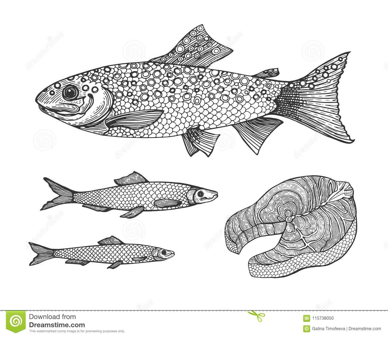 Vintage Rainbow Trout Illustration - Wiring Diagrams •