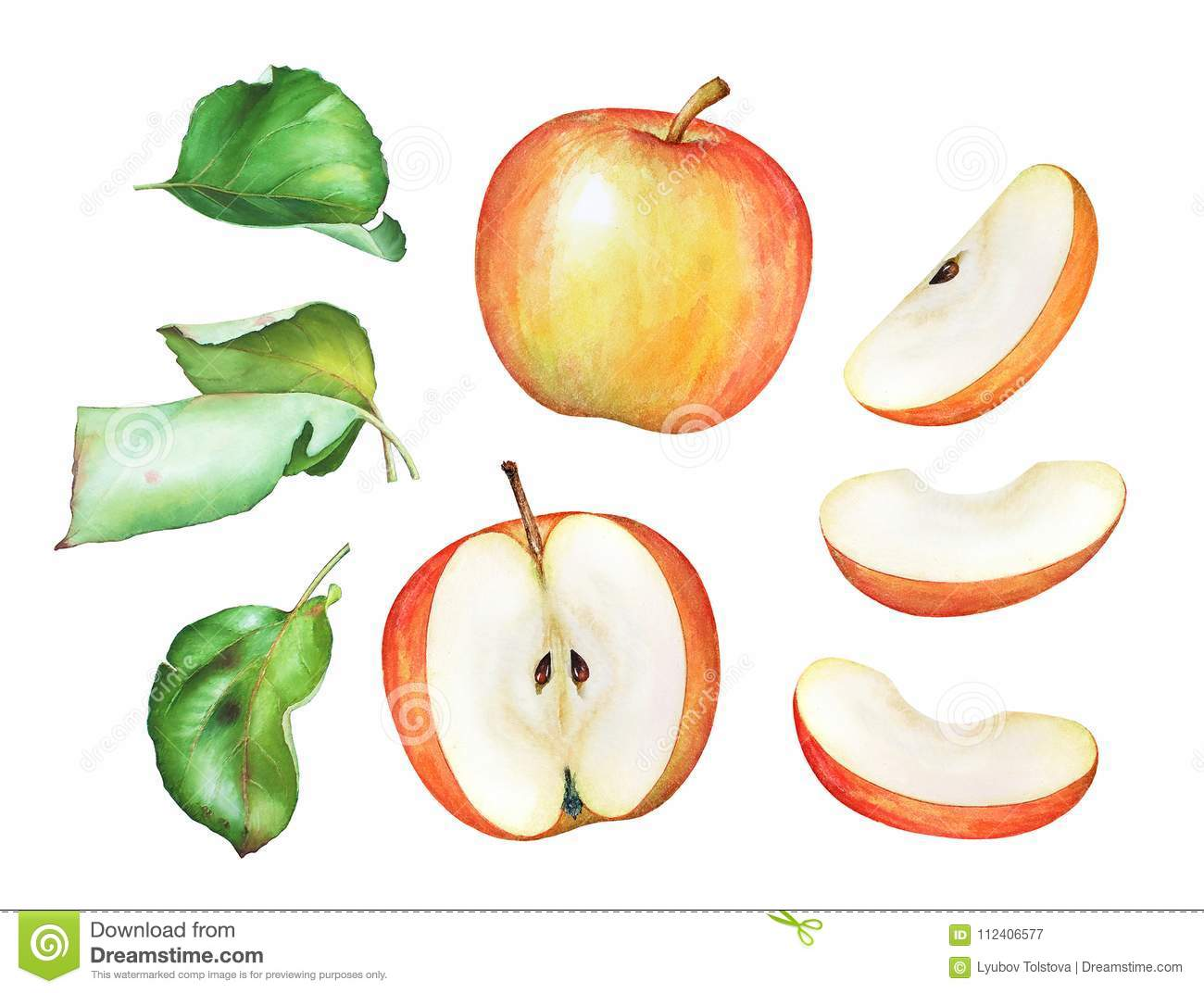 Watercolor illustration of the apples and green leaves