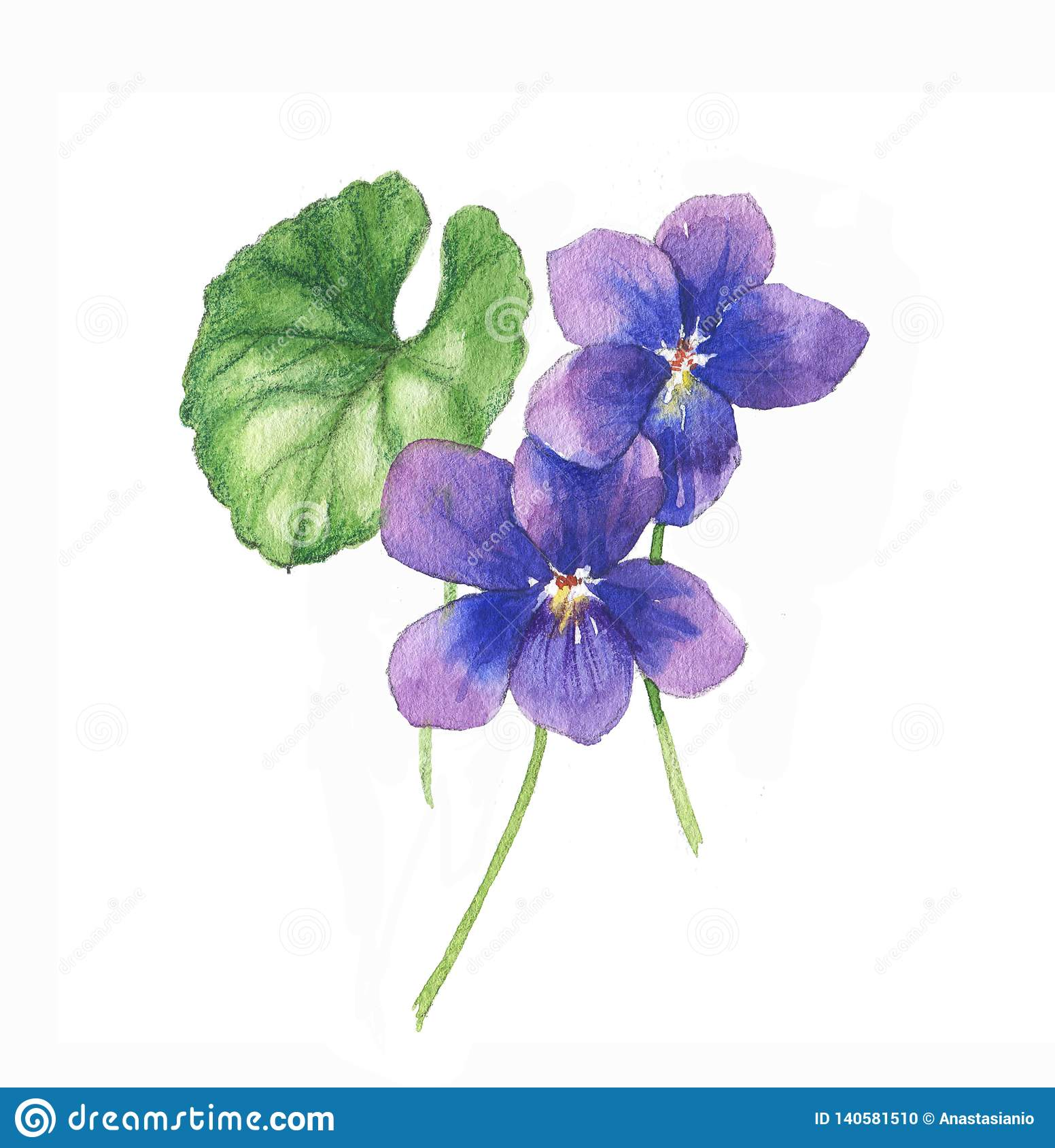 Hand Drawn Watercolor Illustration Of The Isolated Violets Flowers Stock Illustration Illustration Of Natural Bouquet 140581510