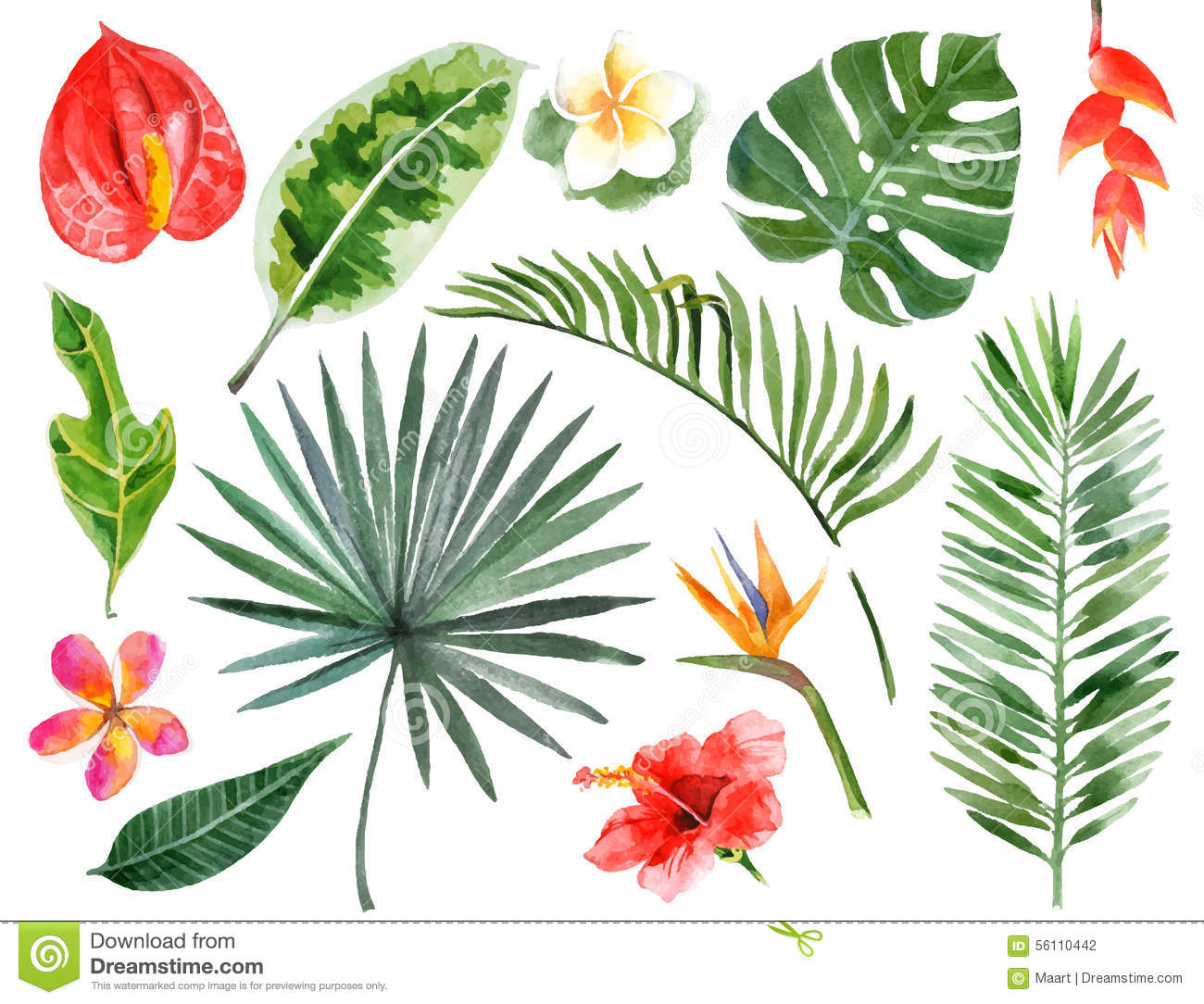 Stock Illustration Hand Drawn Watercolor Tropical Plants Large Set Ima...