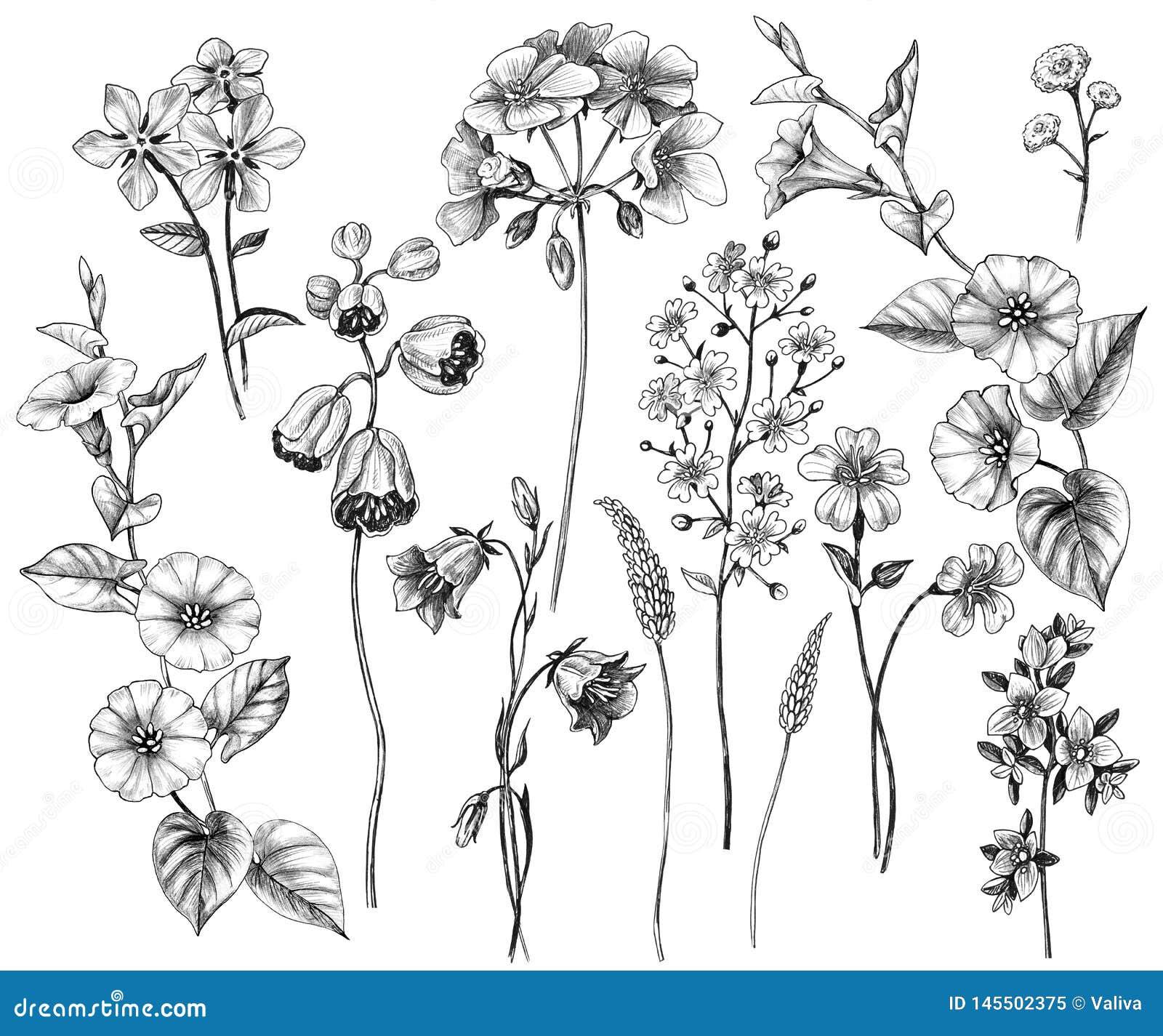 Hand Drawn Wild Flowers Set Stock Illustration Illustration Of Drawn Drawing 145502375