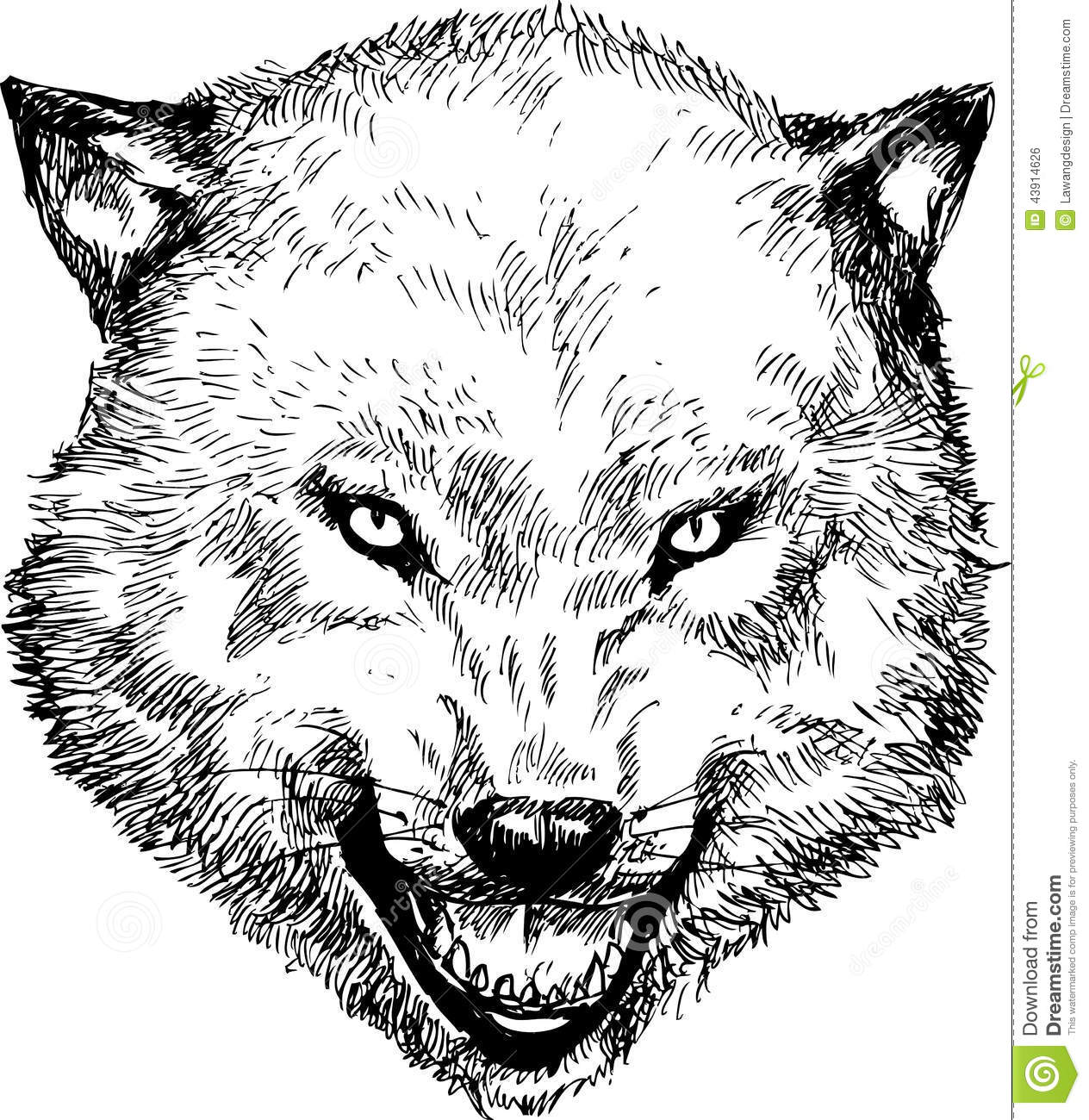 hand drawn wolf head stock vector image of nature