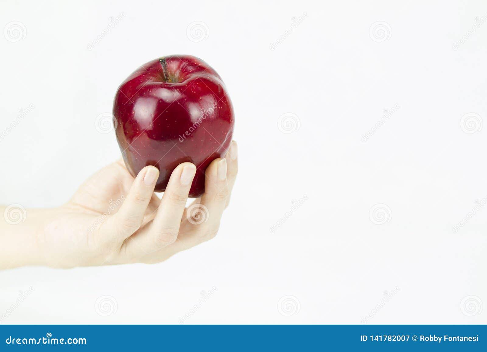 Hand einer jungen Frau, die einen roten Apfel wie der angeboten von der Hexe Schneewittchen auf weißem Hintergrund hält