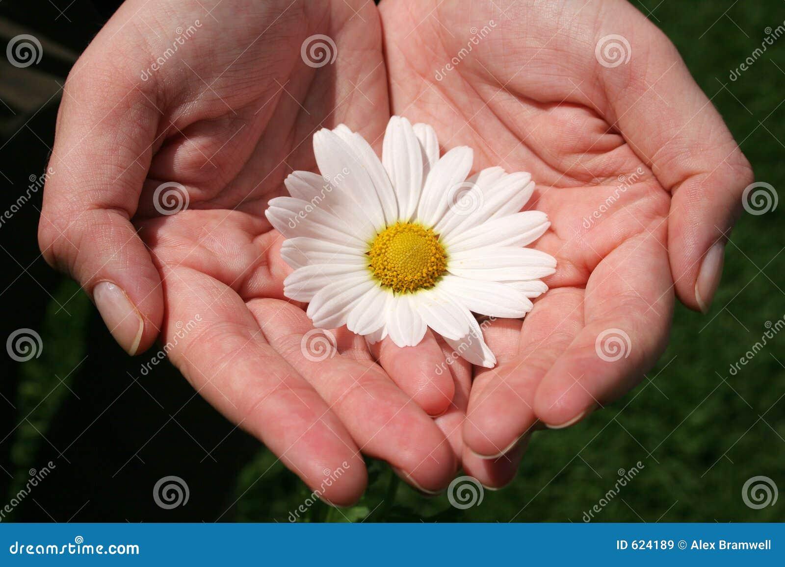 Hand en Bloemen