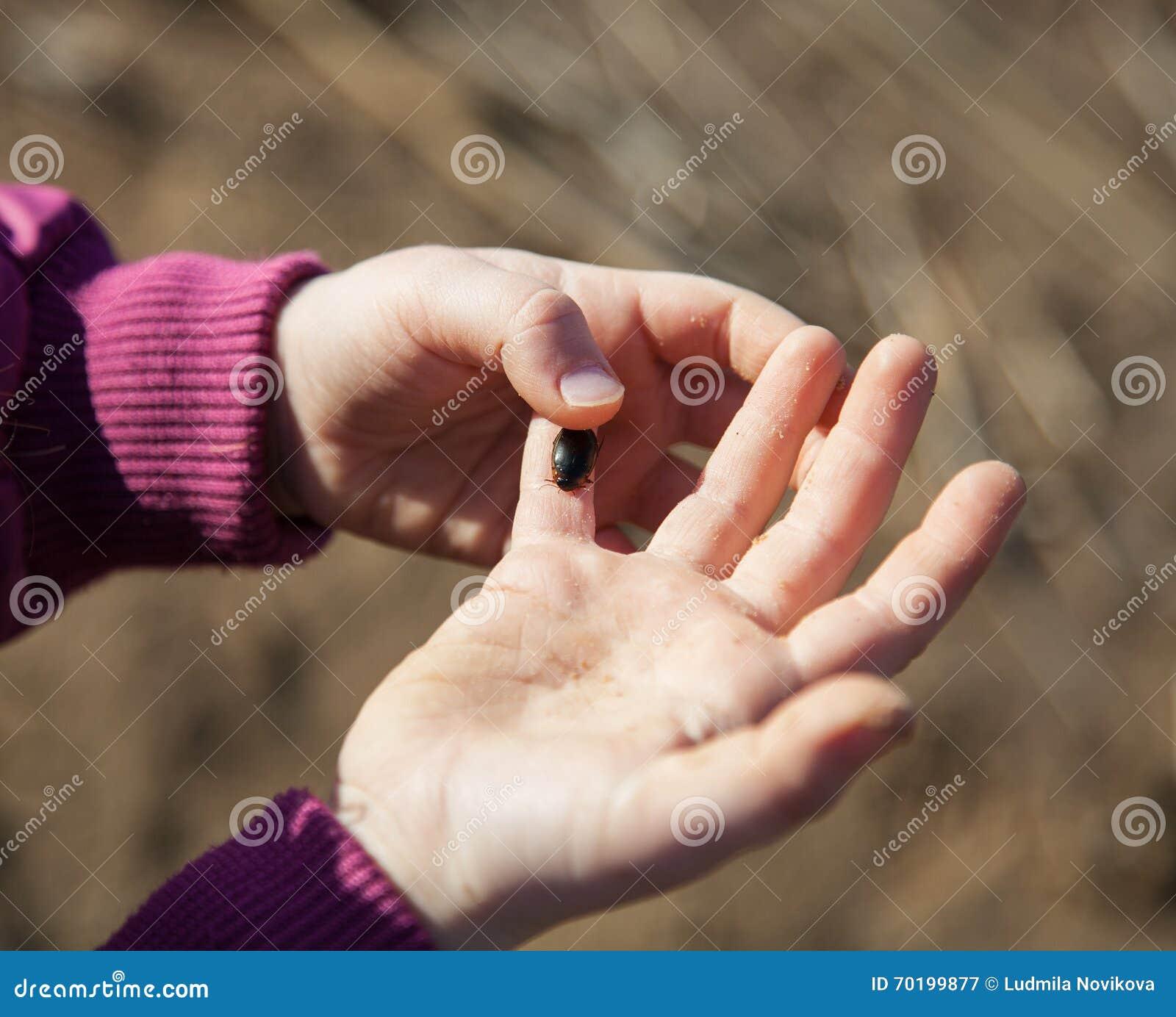 Hand för barn` som s rymmer en vattenskalbagge