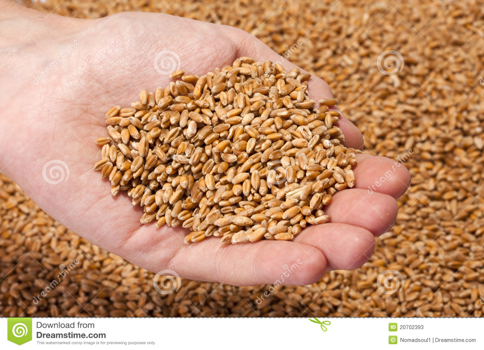 The Seeds Mr Farmer