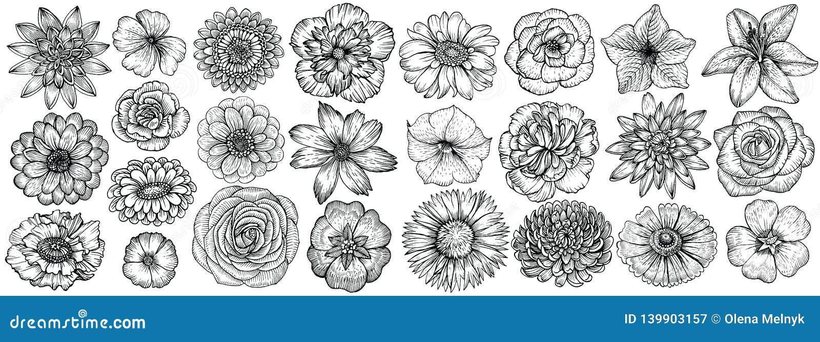 Hand getrokken bloemen, vectorillustratie Bloemen uitstekende schets