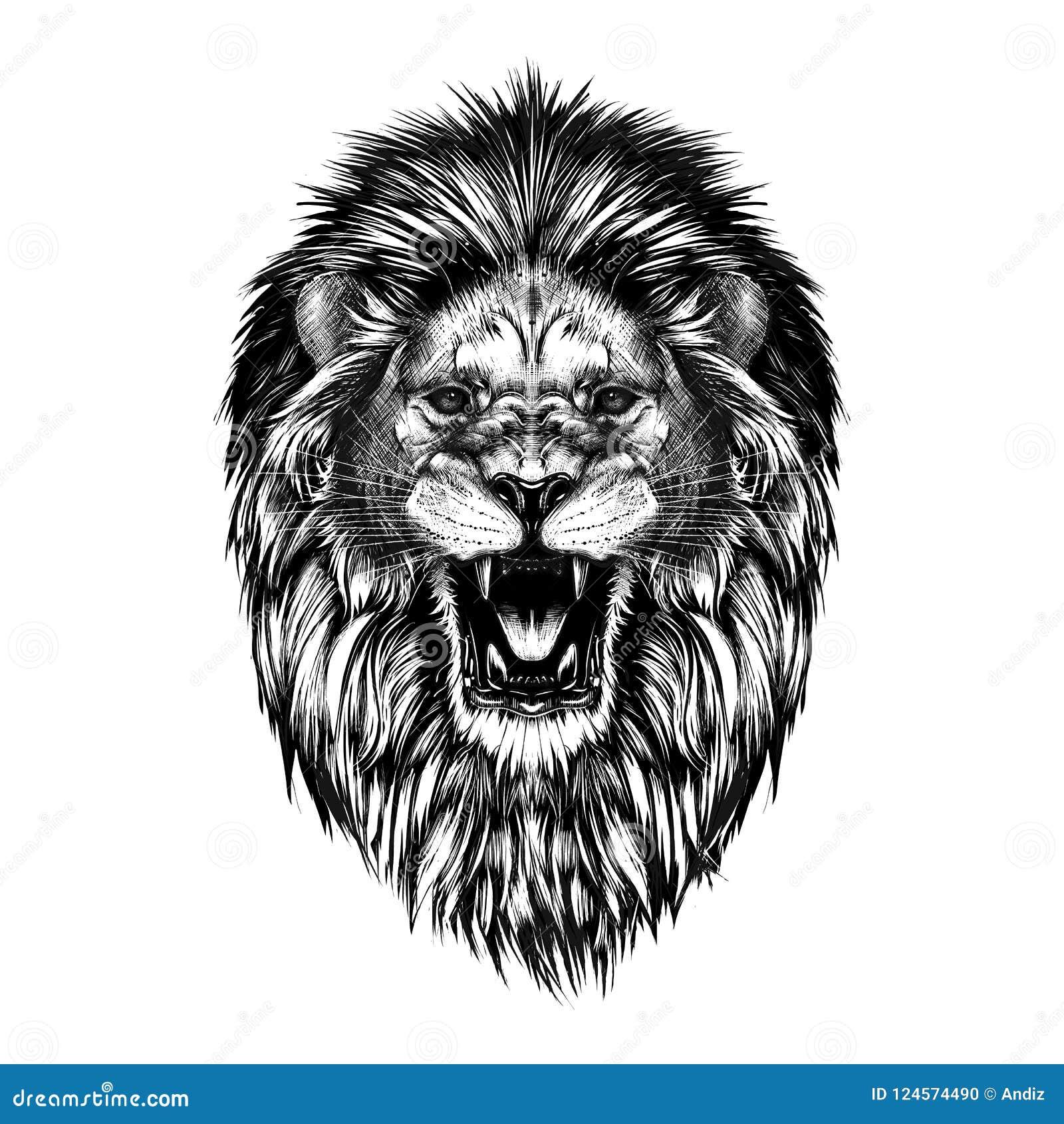 Hand getrokken die schets van leeuwhoofd in zwarte op witte achtergrond wordt geïsoleerd