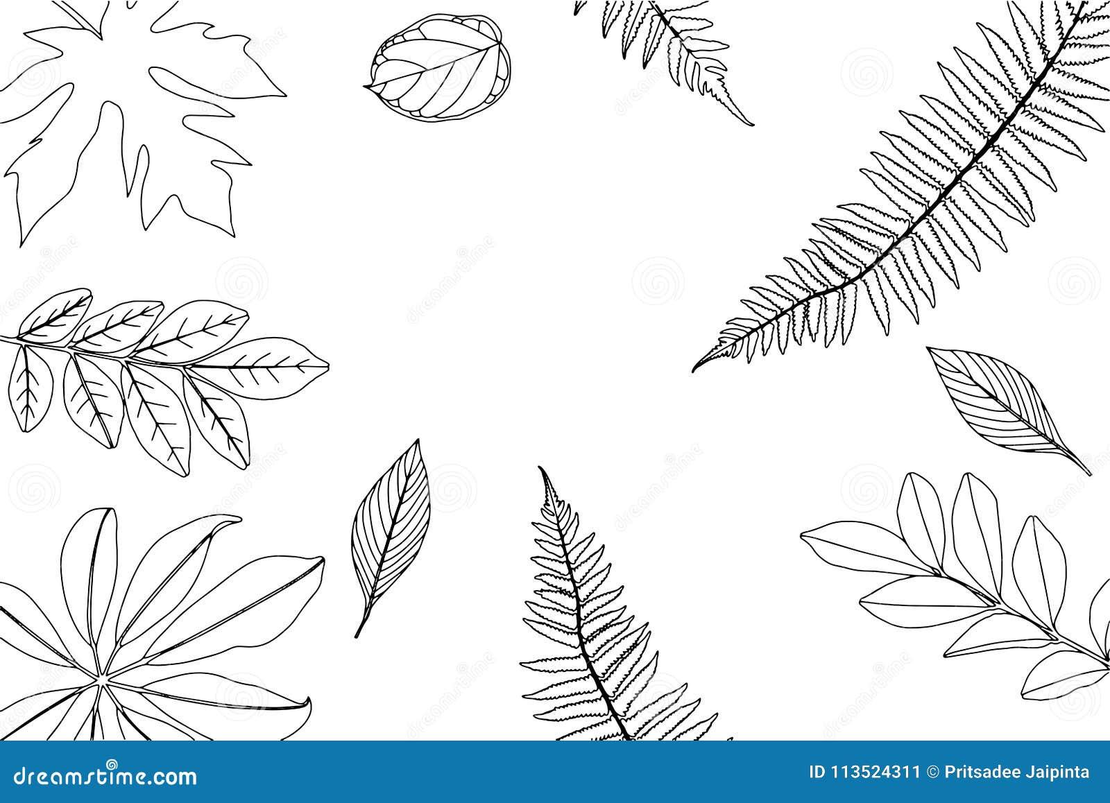Hand getrokken kader van bladeren en installaties Vector illustratie