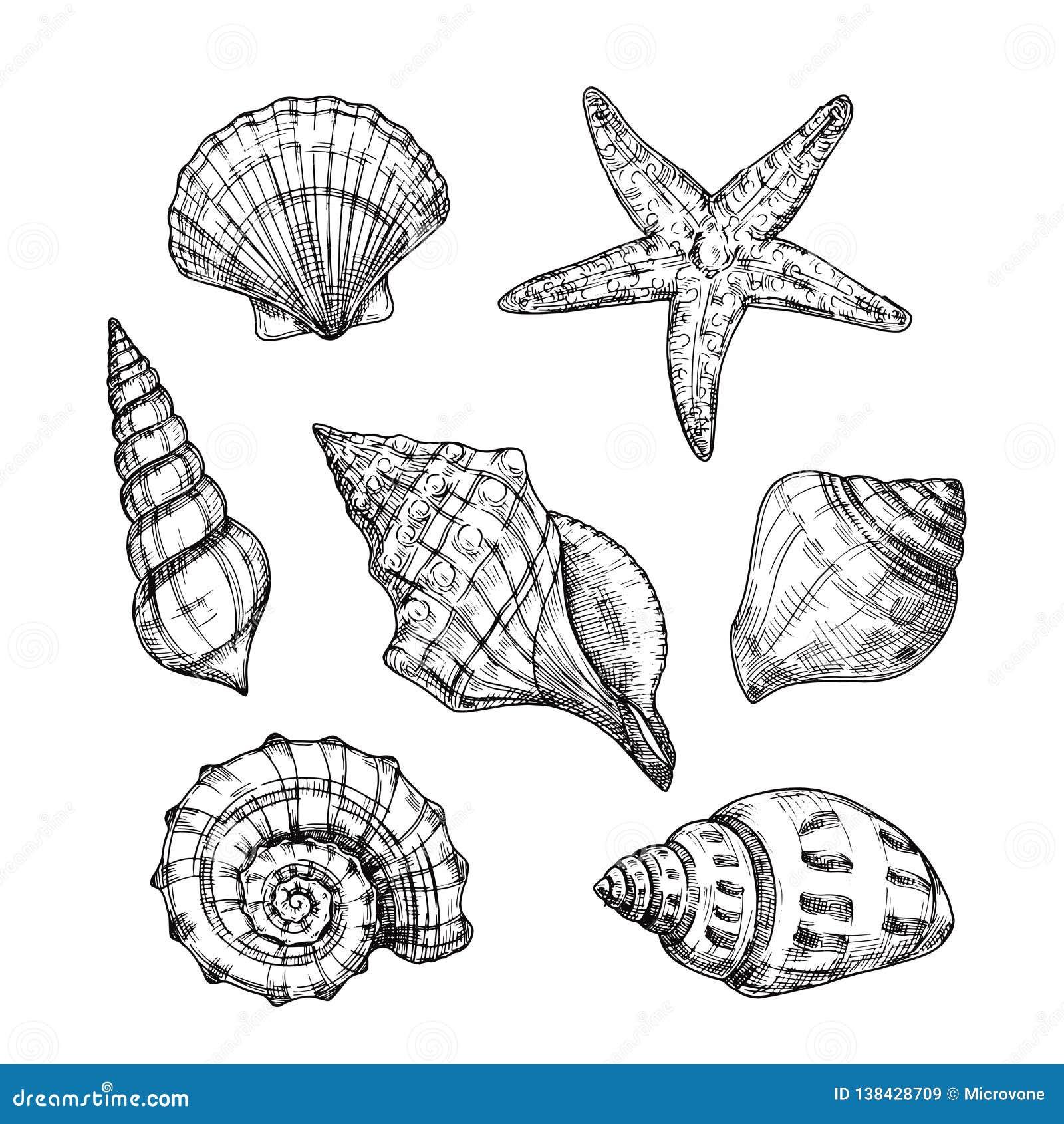 Hand getrokken overzeese shells Het tropische weekdier van zeesterschaaldieren in uitstekende gravurestijl Zeeschelp geïsoleerde