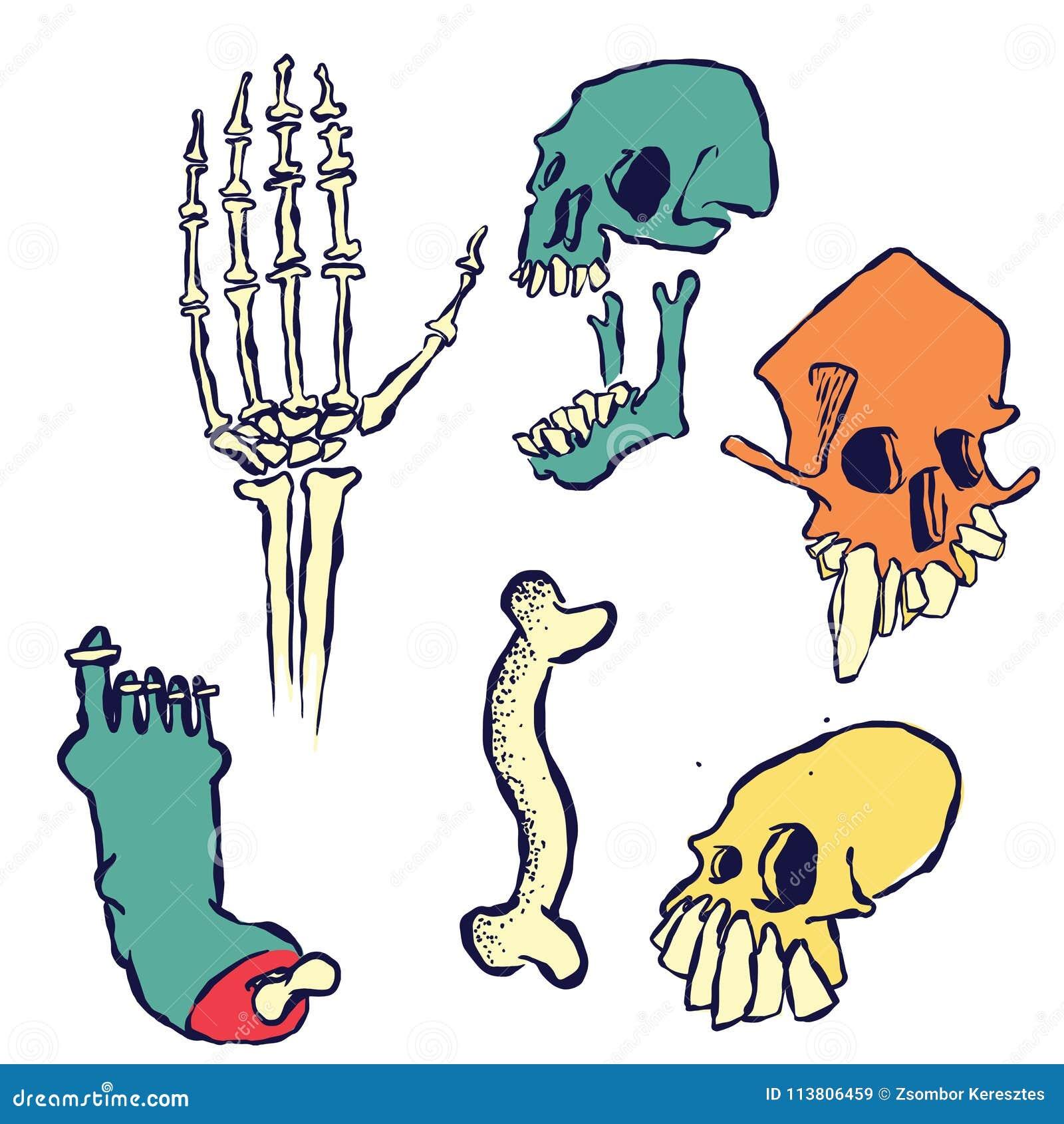 Hand Getrokken Schedels, Beenderen en een Been