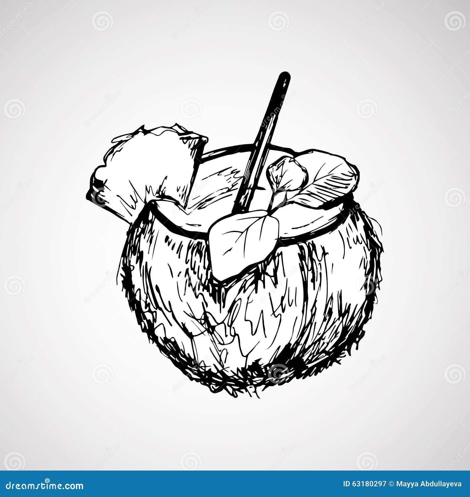 hand gezeichnete kokosnuss mit stock vektor abbildung illustration von auslegung coco 63180297. Black Bedroom Furniture Sets. Home Design Ideas