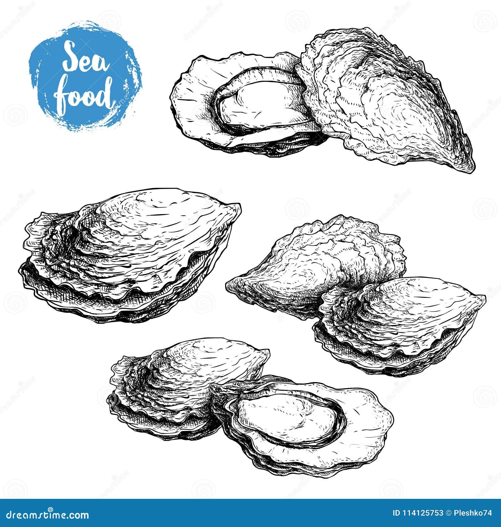 Hand gezeichnete Skizzenausternzusammensetzungen eingestellt Hand gezeichnete Illustration von frischen Meeresfrüchten Lokalisier
