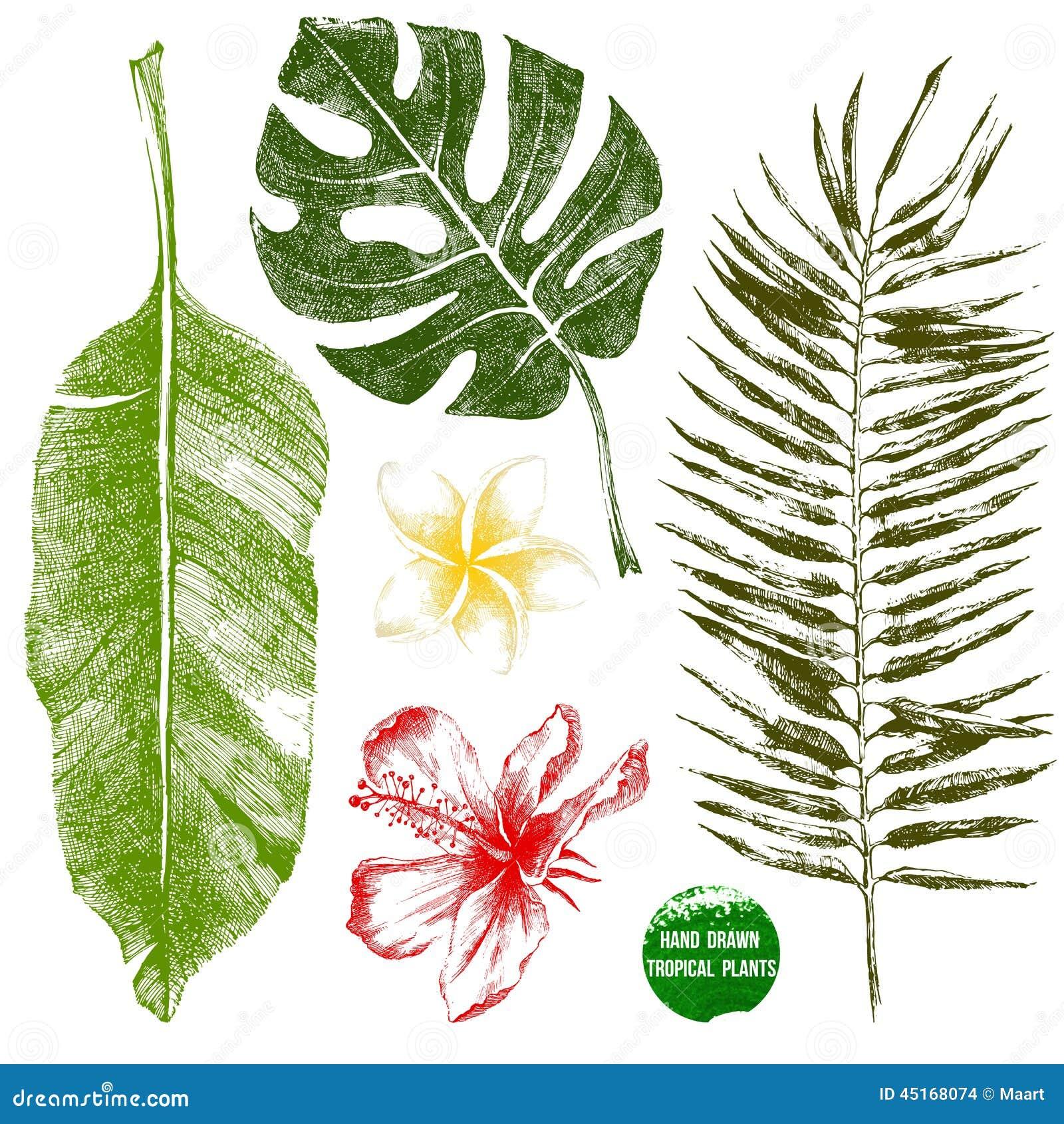 Hand Gezeichnete Tropische Blätter Und Blumen Vektor Abbildung ...