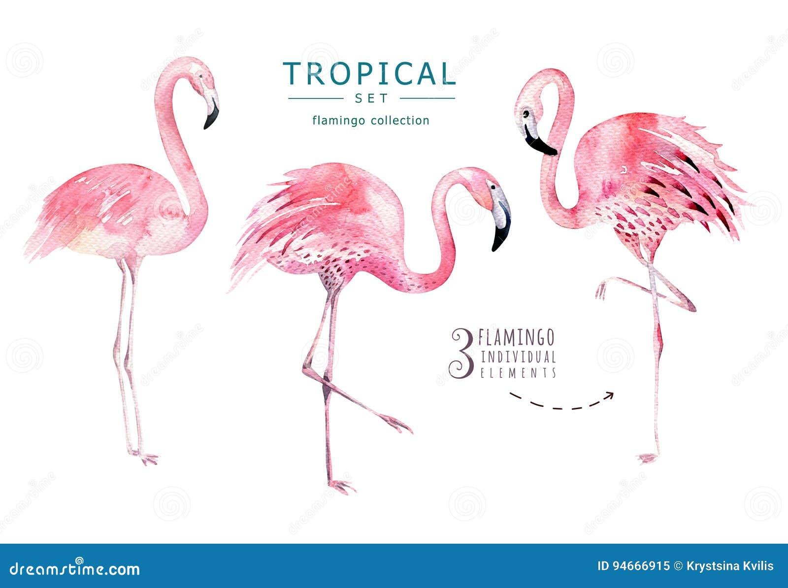Hand gezeichnete tropische Vögel des Aquarells stellten vom Flamingo ein Exotische Vogelillustrationen, Dschungelbaum, modische K