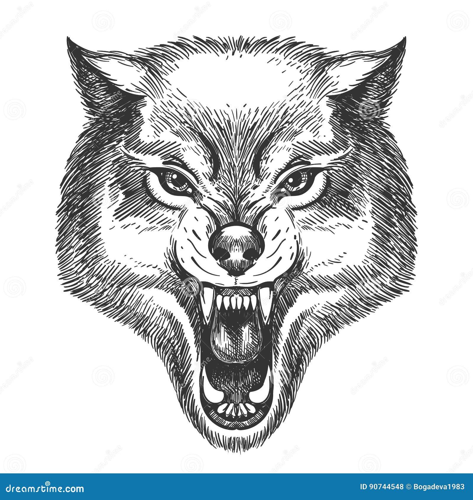 Hand Gezeichneter Wolfkopf Vektor Abbildung Illustration Von