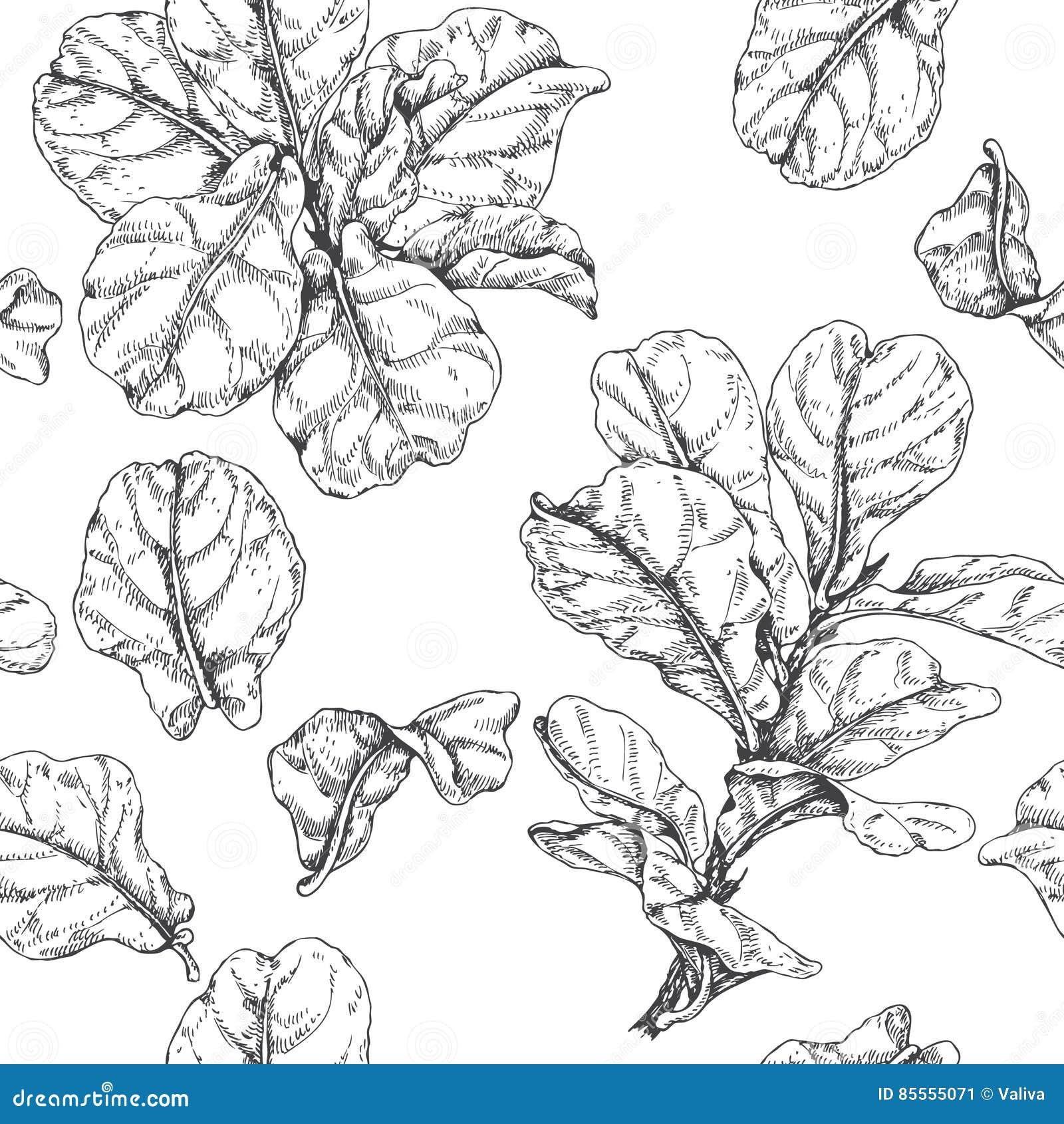 Hand gezeichnetes Ficus-Niederlassungs-Muster