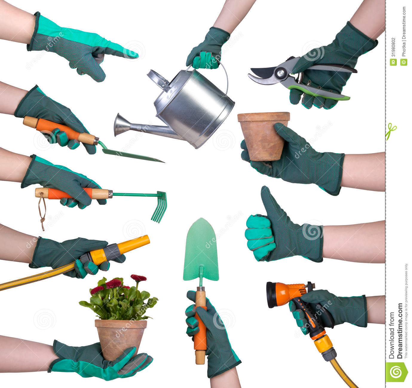 Hand In A Glove Holding Gardening Tools Stock Photography - Image ...
