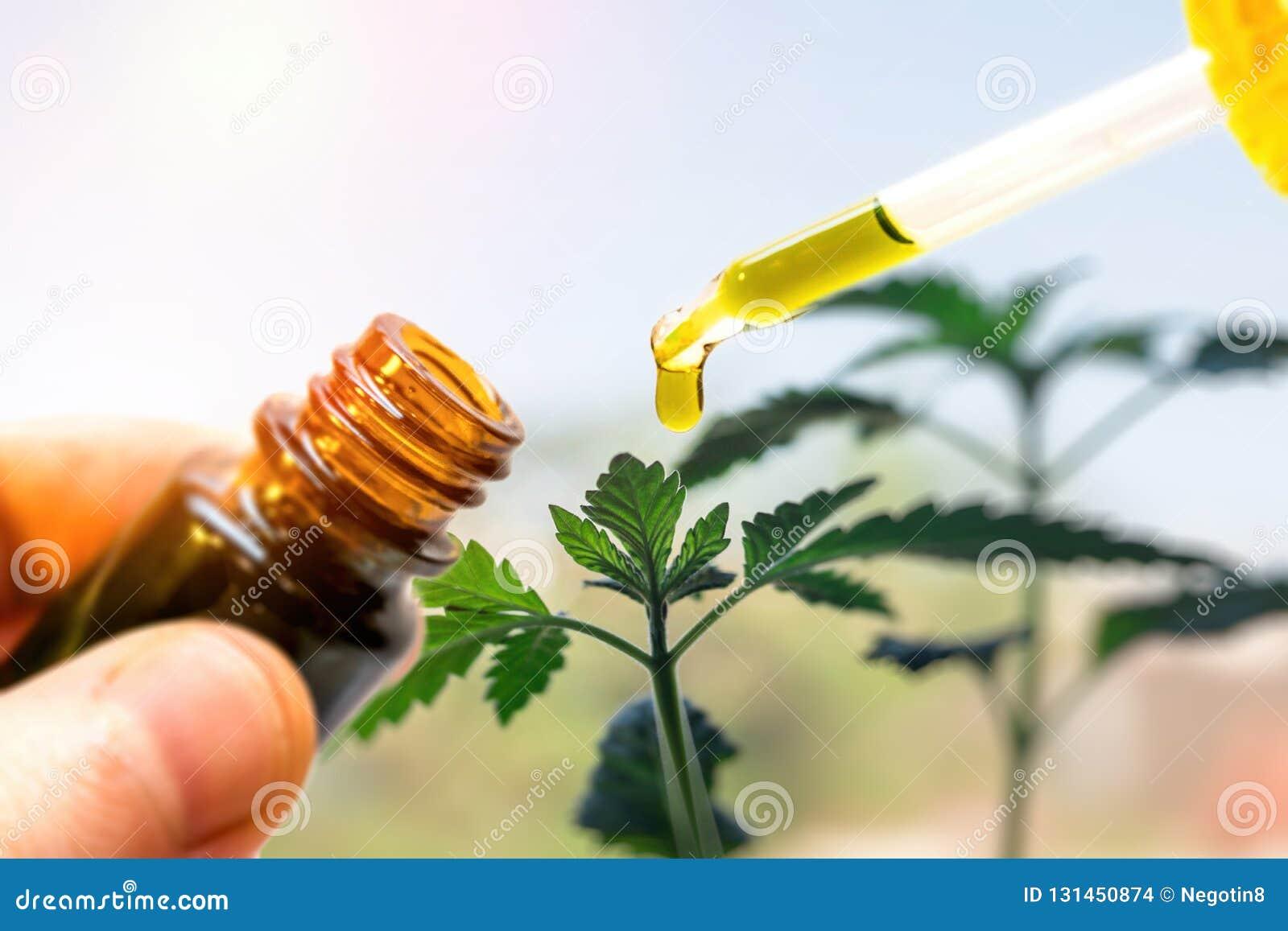 Hand holding bottle of Cannabis oil against Marijuana plant, CBD oil pipette