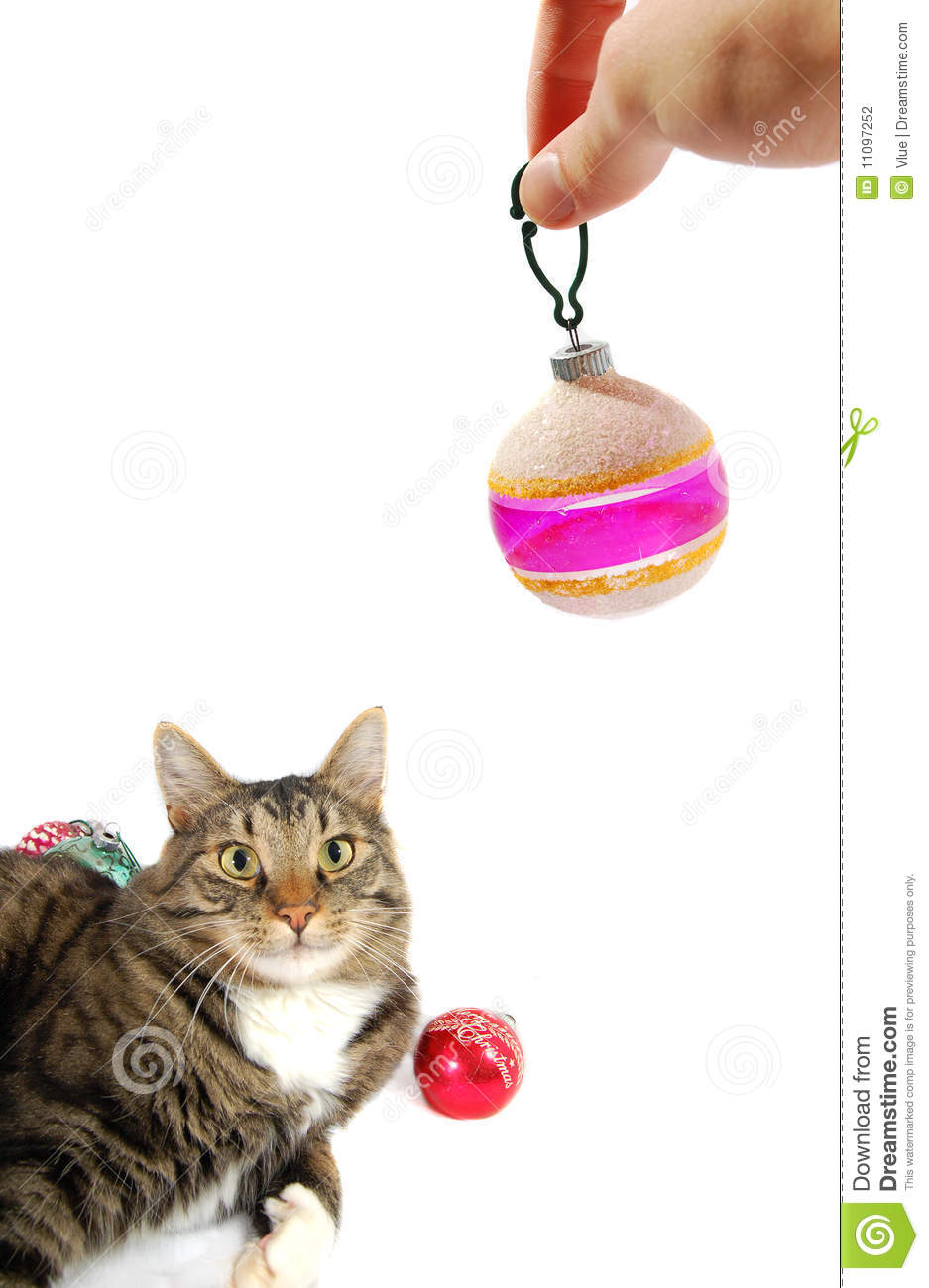 Hand Holding Christmas Ornament Next To Cat Stock Photo - Image of ...