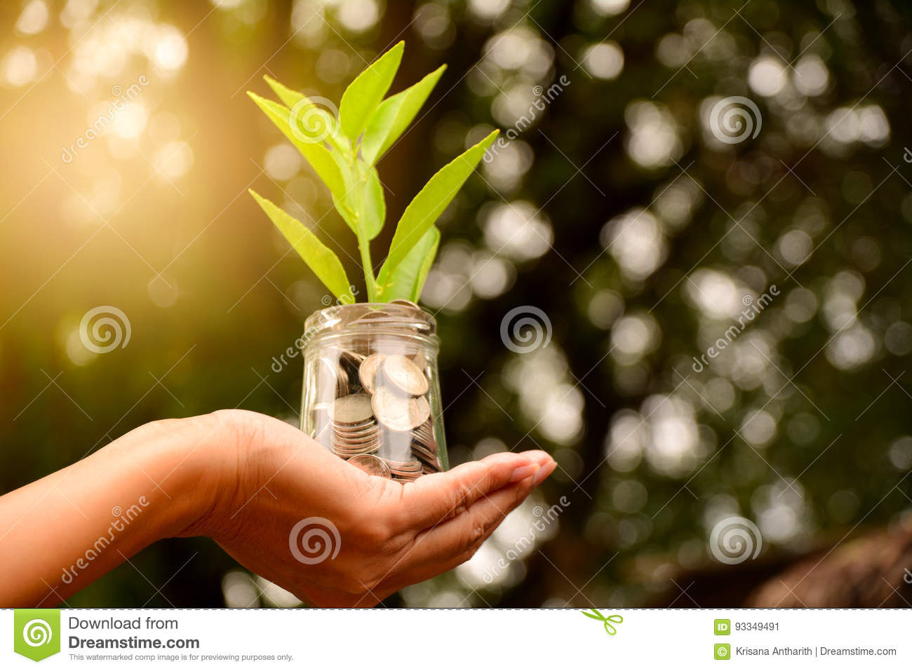 Hand holding glass jar and have plant on coins for save money an