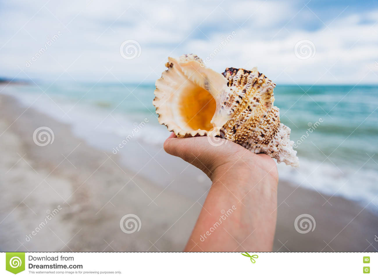 A hand holding a large seashell on tropical beach background