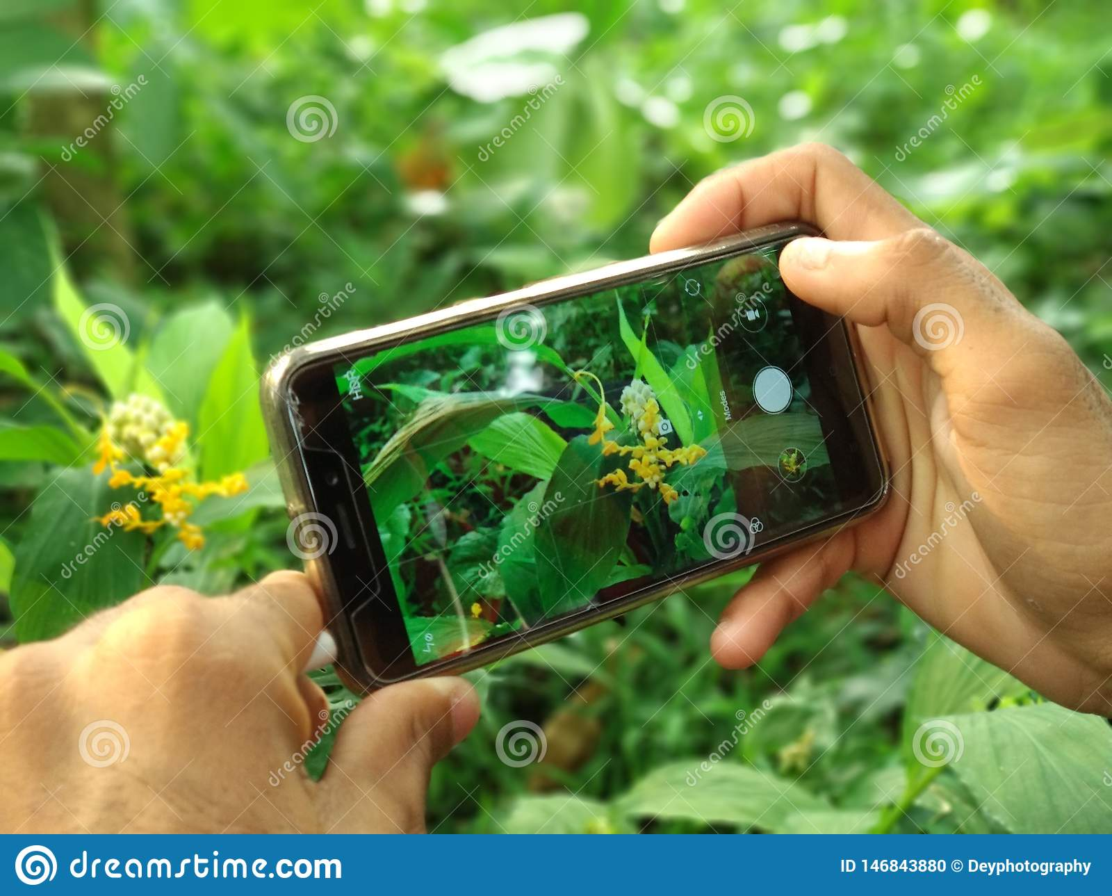 Hand holding Mobile phone click photo flowers in the garden