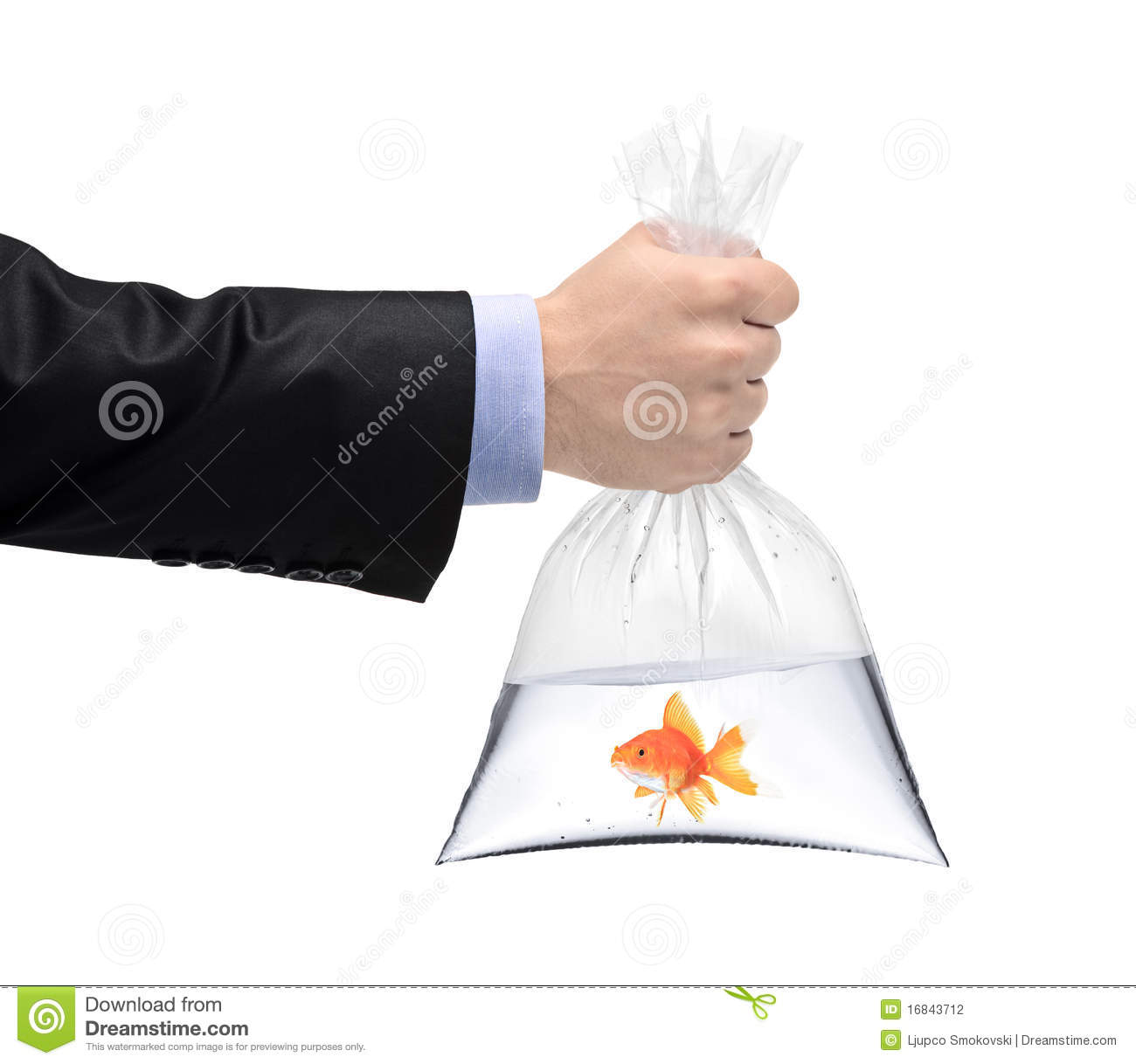 A hand holding a plastic bag with a golden fish stock for Fish in a bag