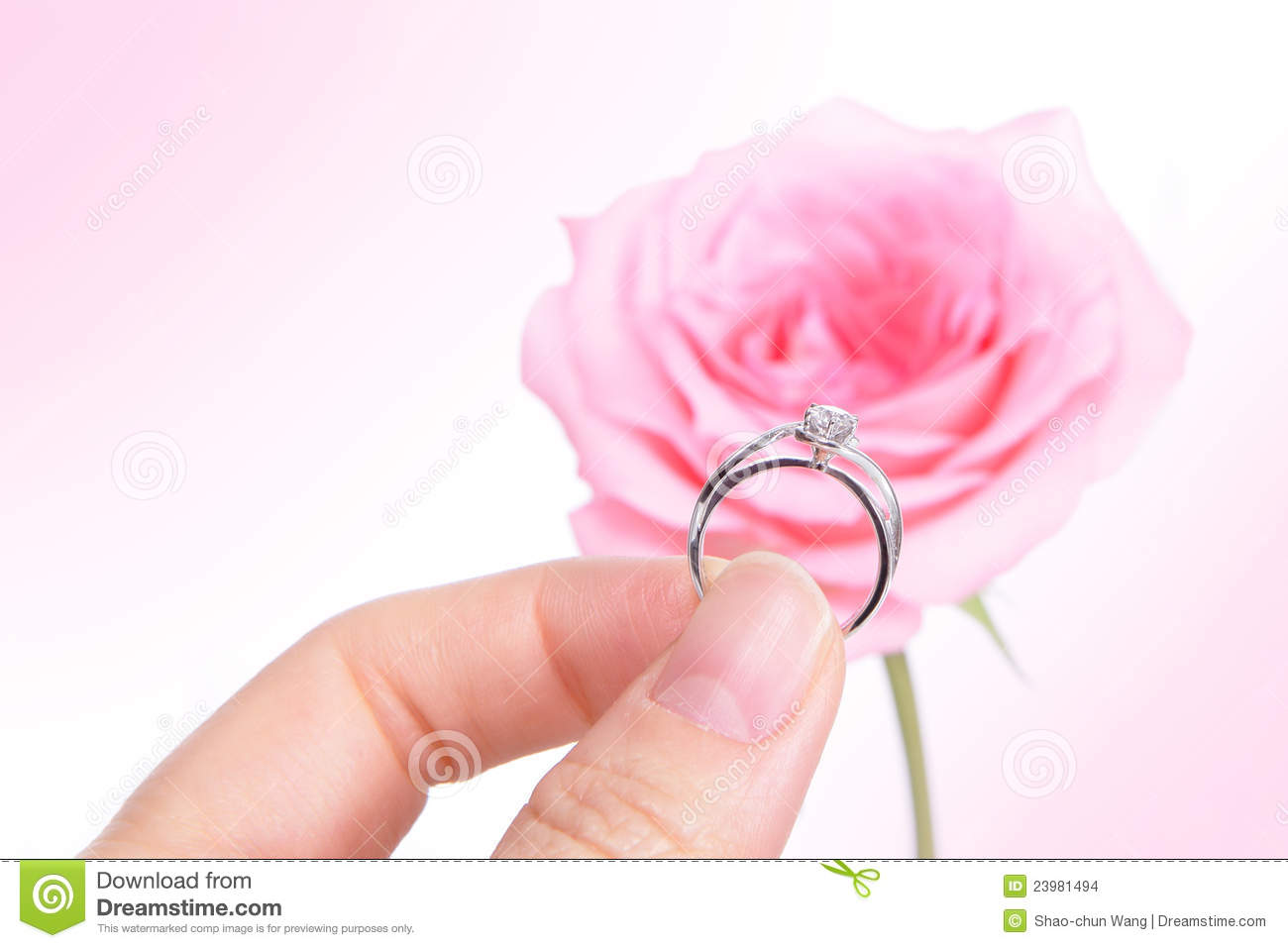 Hand Holding Romantic Diamond Wedding Ring With Pink Rose Background ...