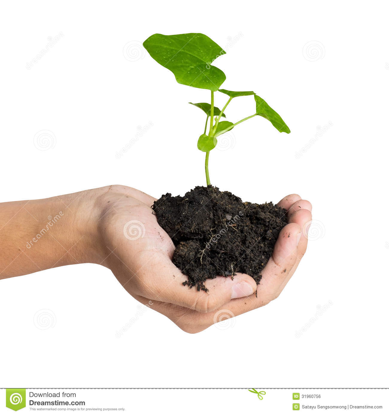 Hand holding a tree for giving life to the earth stock for Generous living