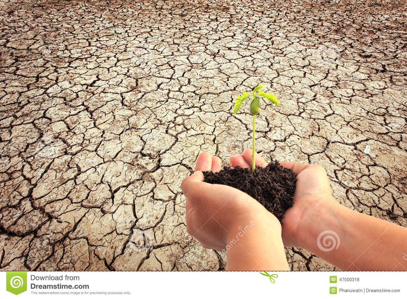 Hand holding young plant with soil on cracked earth for Soil young s modulus