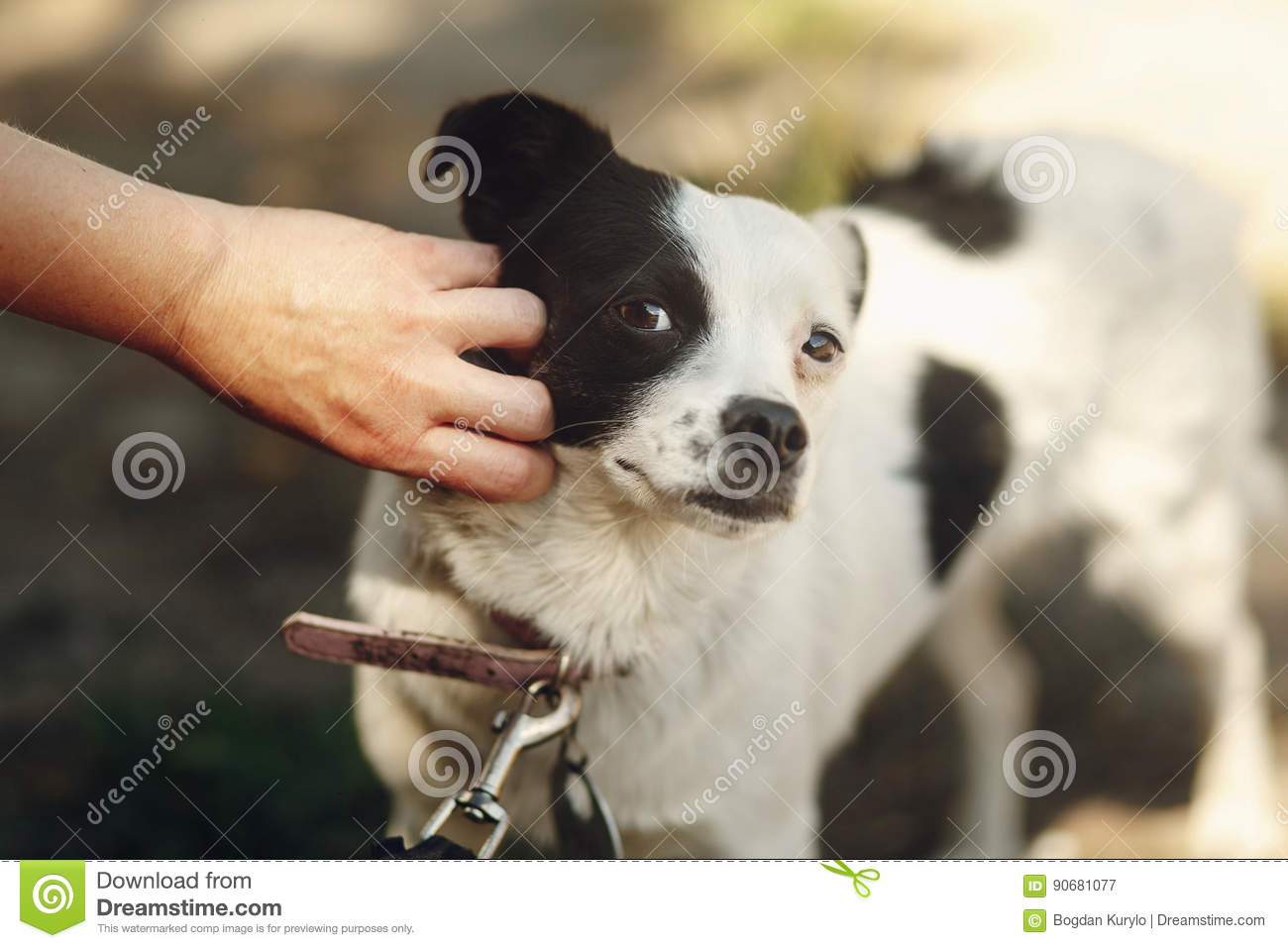Hand Of Man Caress Little Scared Dog From Shelter Posing