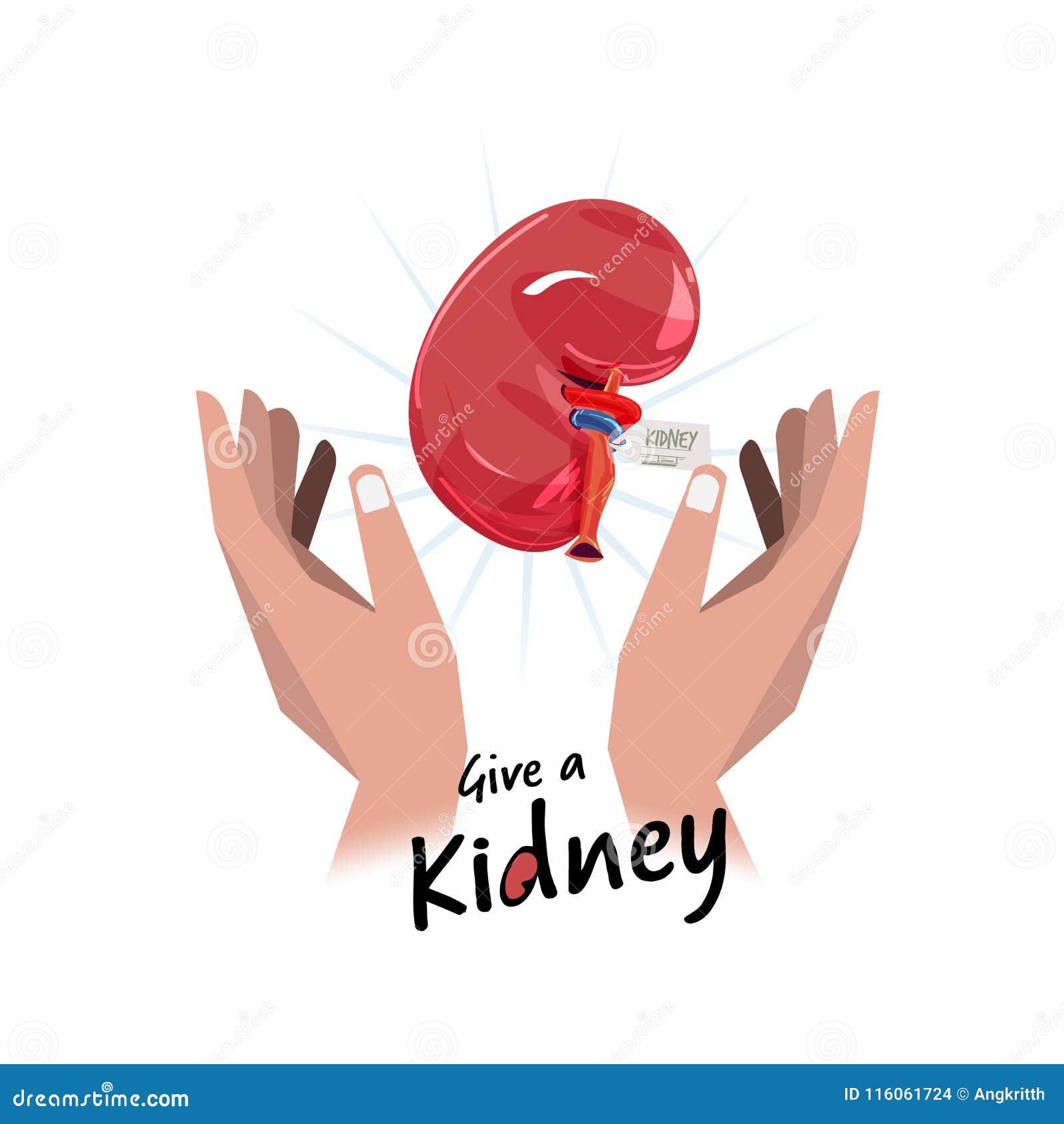 Hand met nier hoop voor het concept van de orgaanschenking - vector