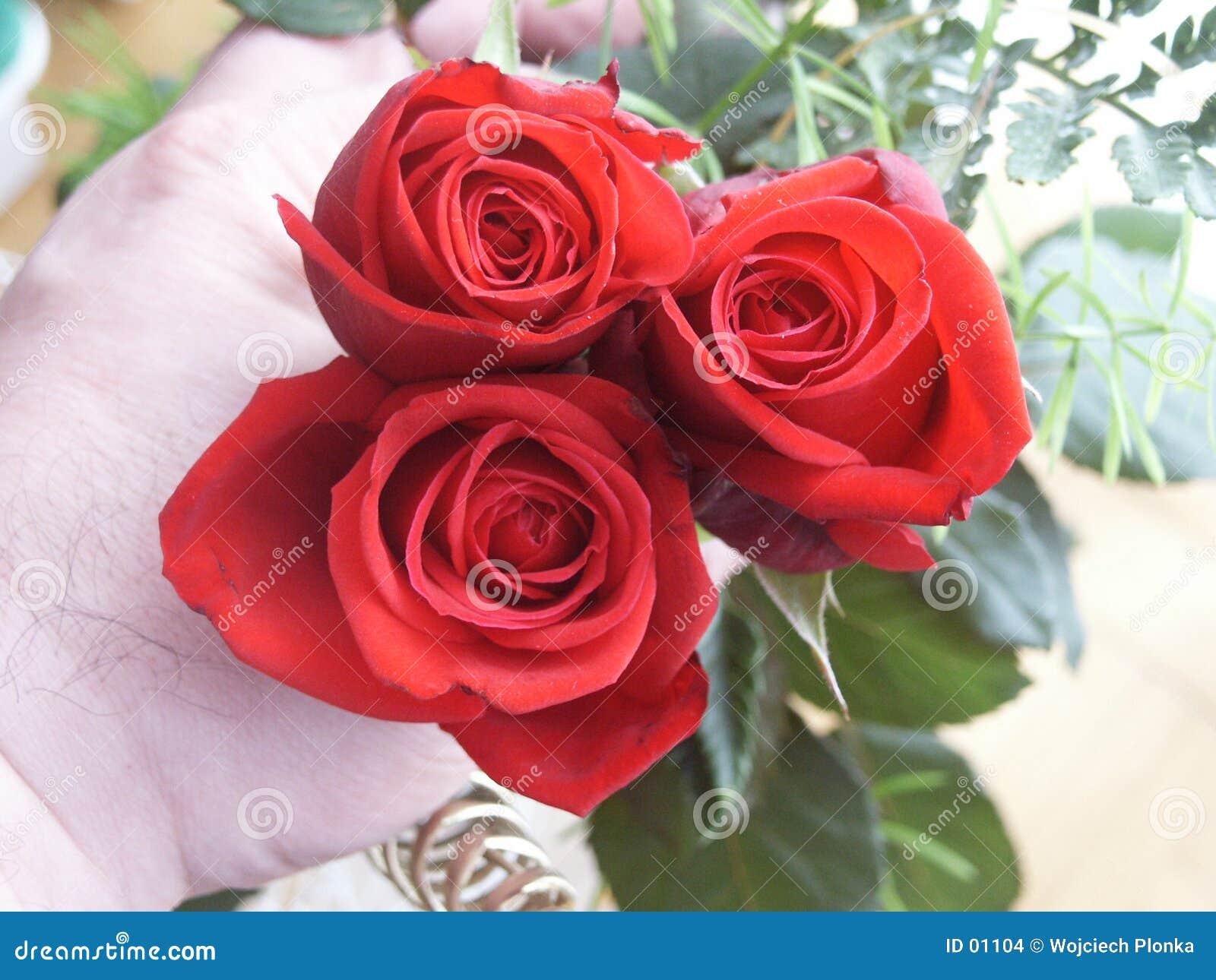 Hand met rozen