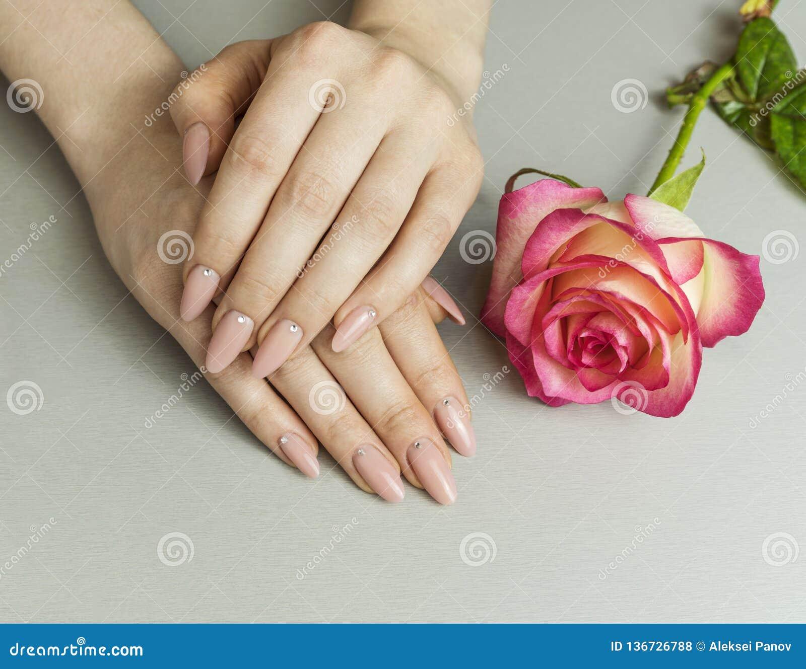 Hand mit künstlichen französischen manikürten Nägeln und rosa rosafarbener Blume