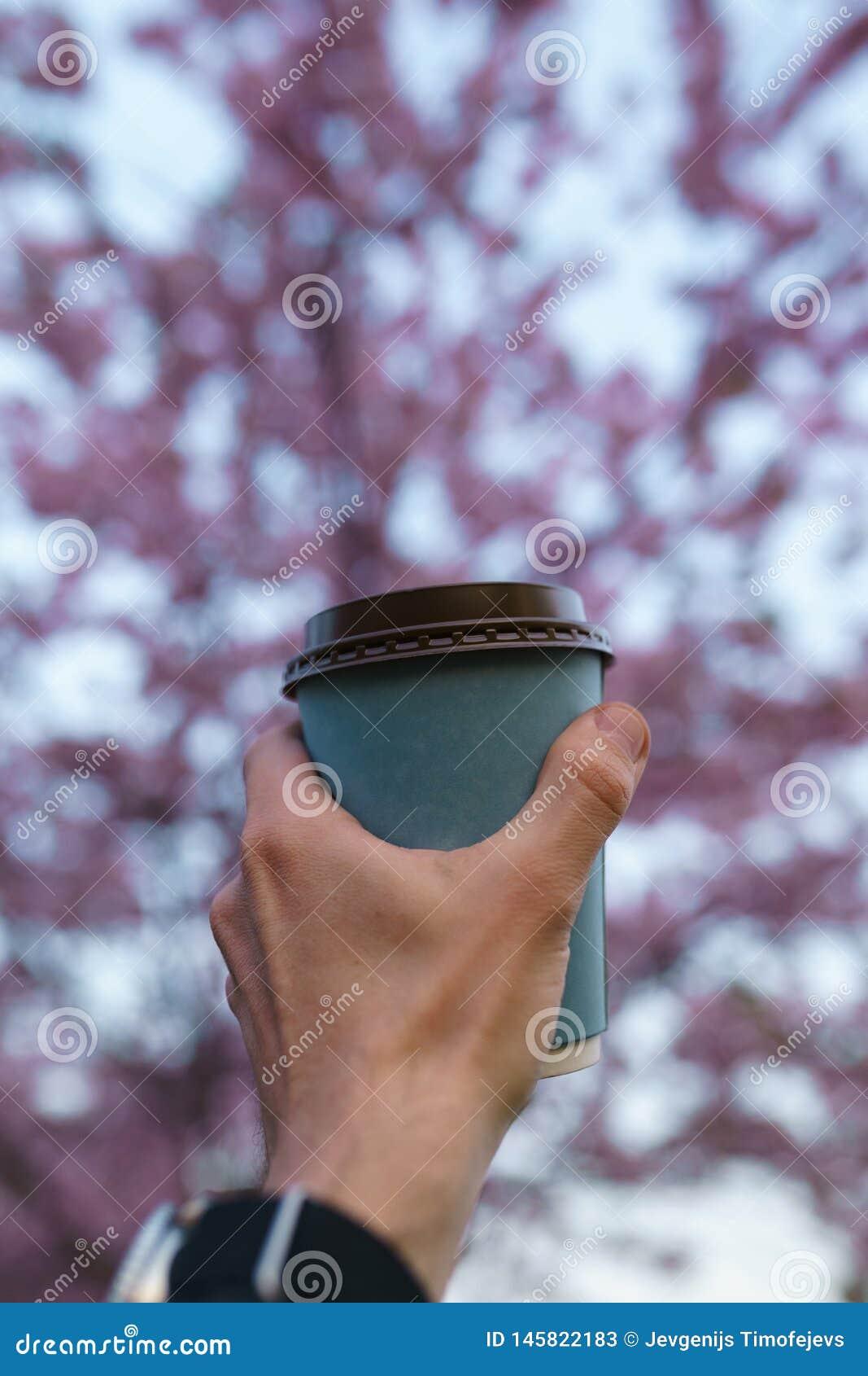 Hand mit Papiertasse kaffee - bunte Kirschbl?te-Kirschbl?te in einem Park in Riga, Ost - europ?ische Hauptstadt von