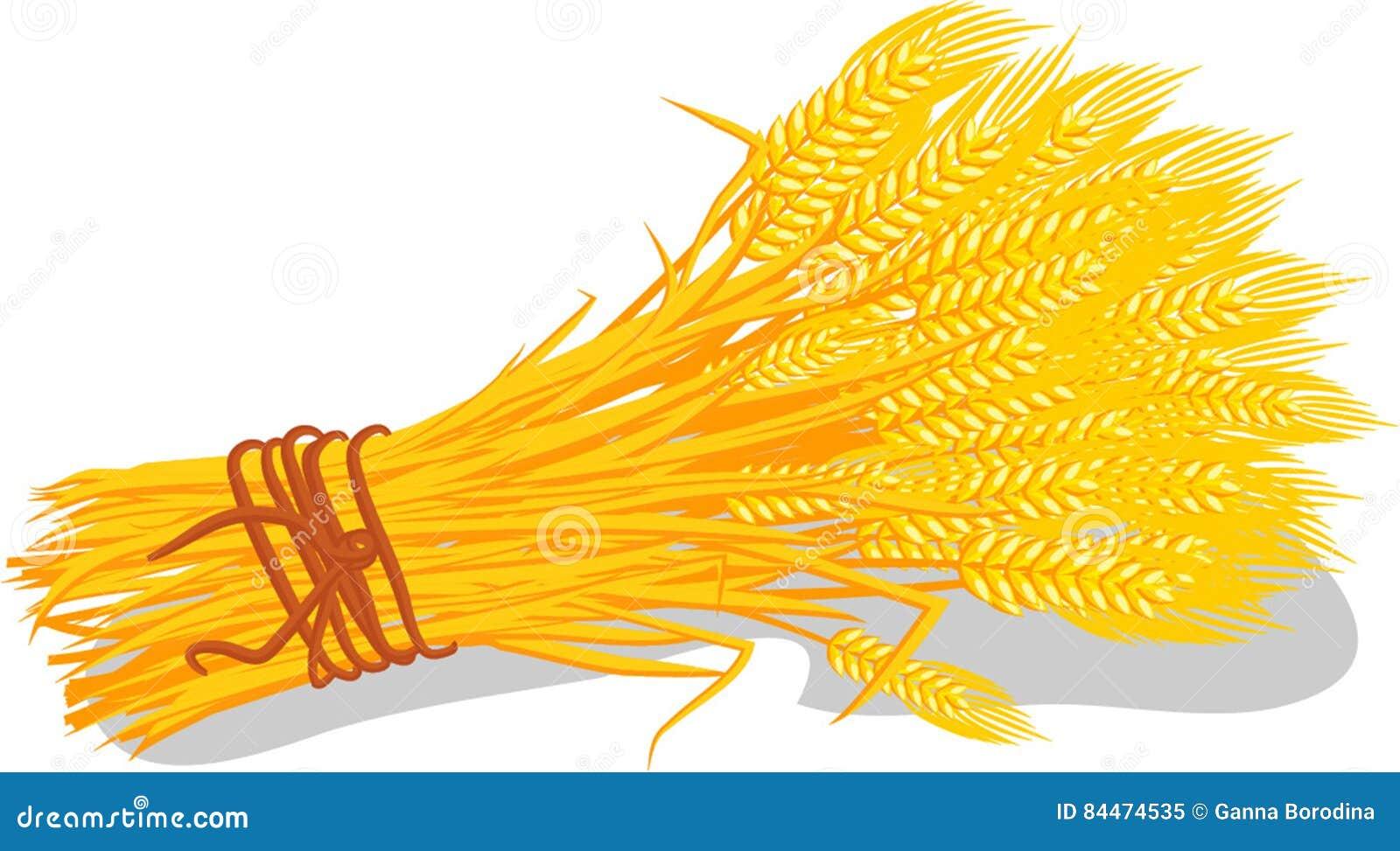 Wheat And Grain Free Food