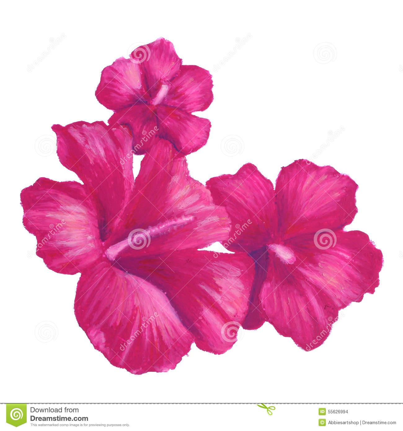 Hibiscus Flower Drawing Hibiscus Drawing Google Search Hibiscus