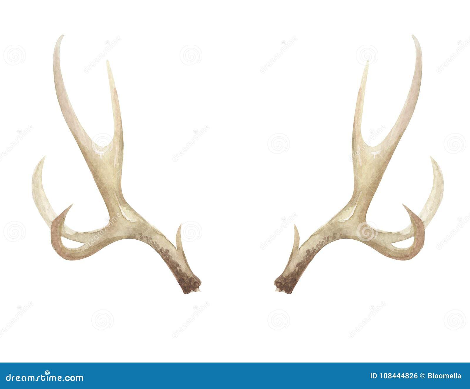 Watercolor Antlers Deer Stag Horns Bone Painted