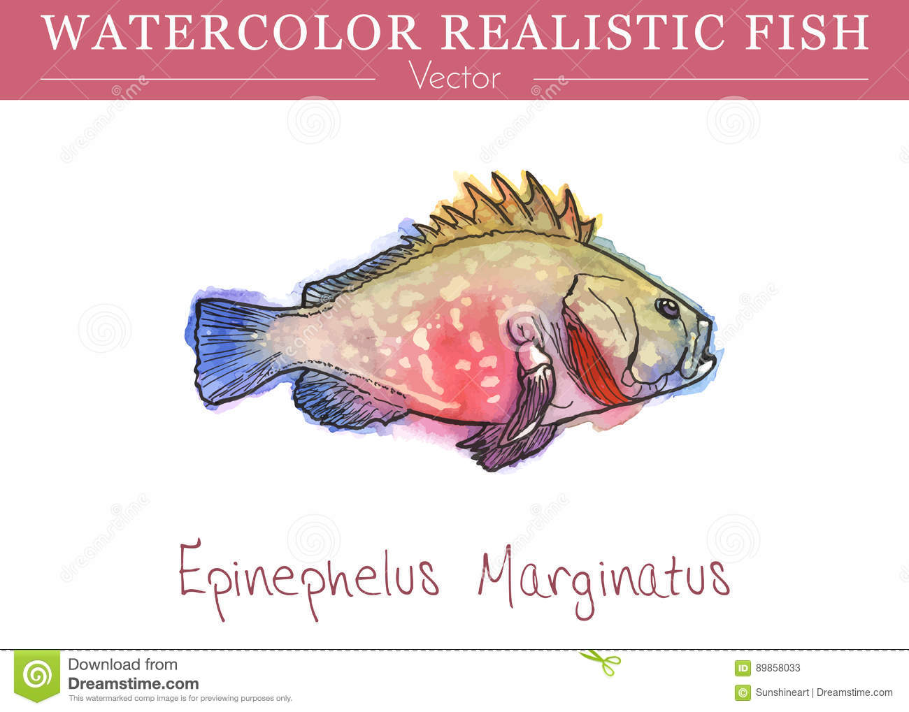 Grouper cartoons illustrations vector stock images for Edible freshwater fish