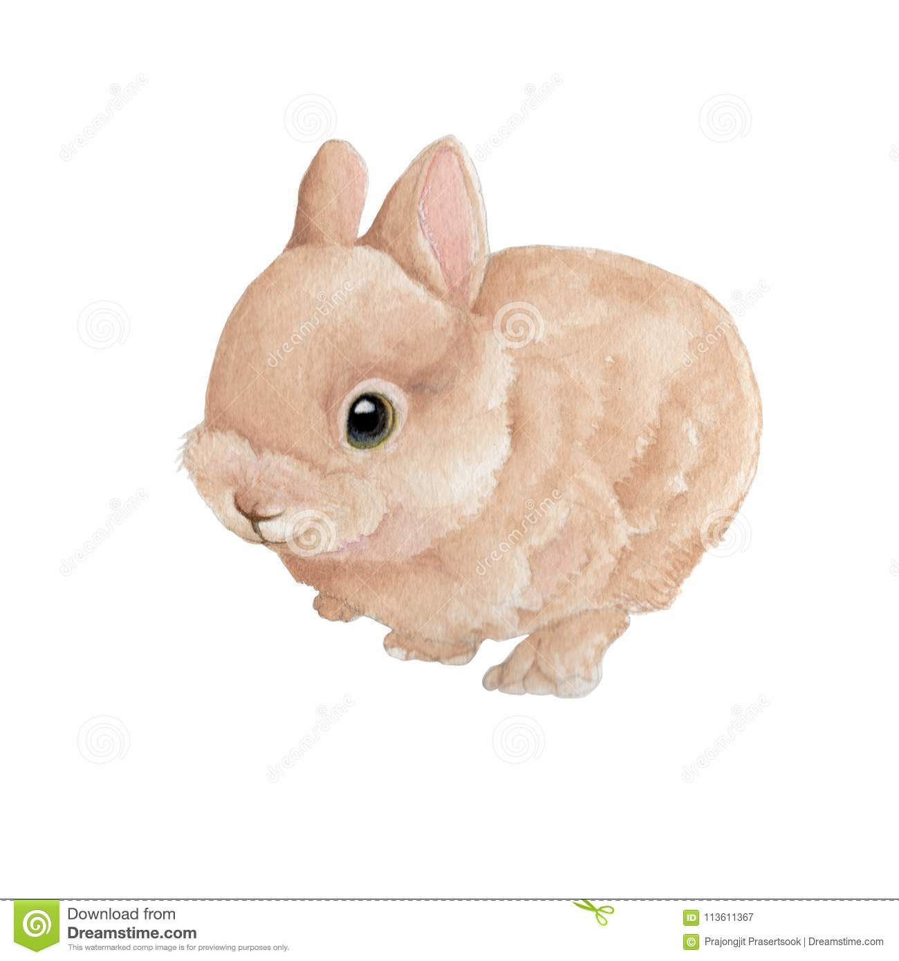 Bunny Isolated On White Background .Hand Painted Watercolor ...