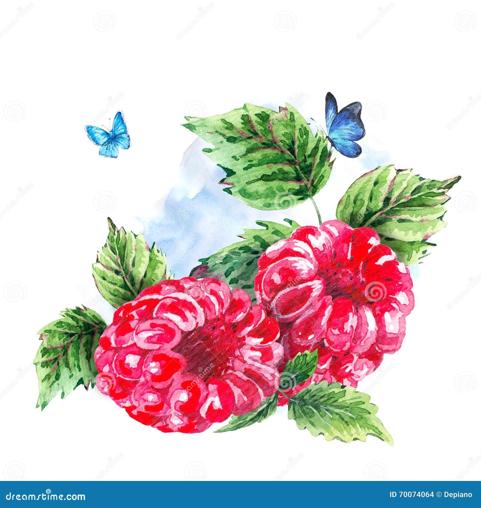 Hand Painting Summer Watercolor Raspberries Stock Illustration