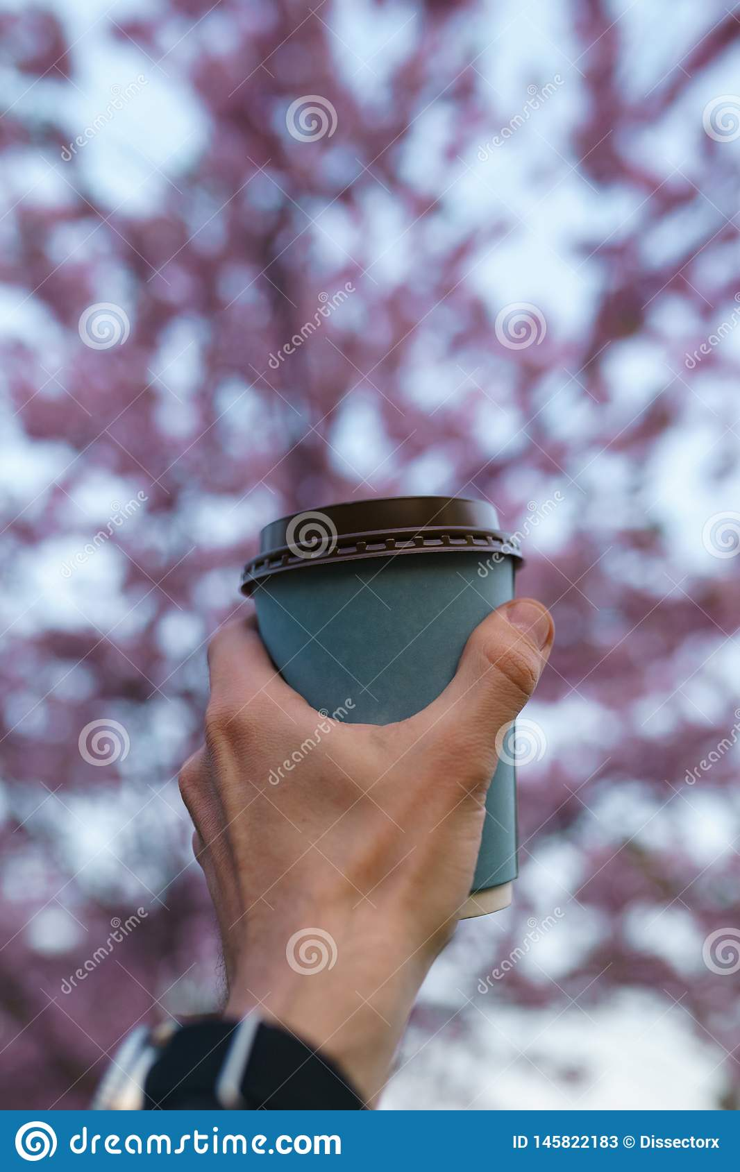 Hand with paper cup of coffee - Colorful sakura cherry blossom in a park in Riga, Eastern European capital city of