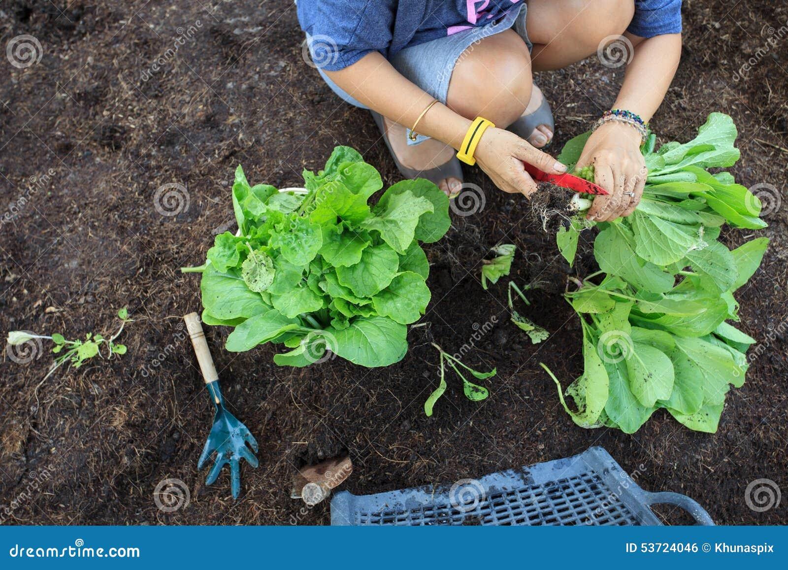 hand of people harvest clean organic vegetable in home. Black Bedroom Furniture Sets. Home Design Ideas