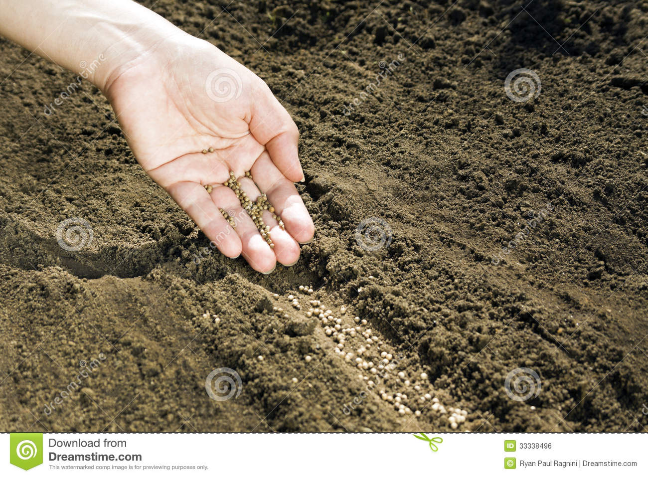 Hand placing seeds on soil royalty free stock image for Soil young s modulus