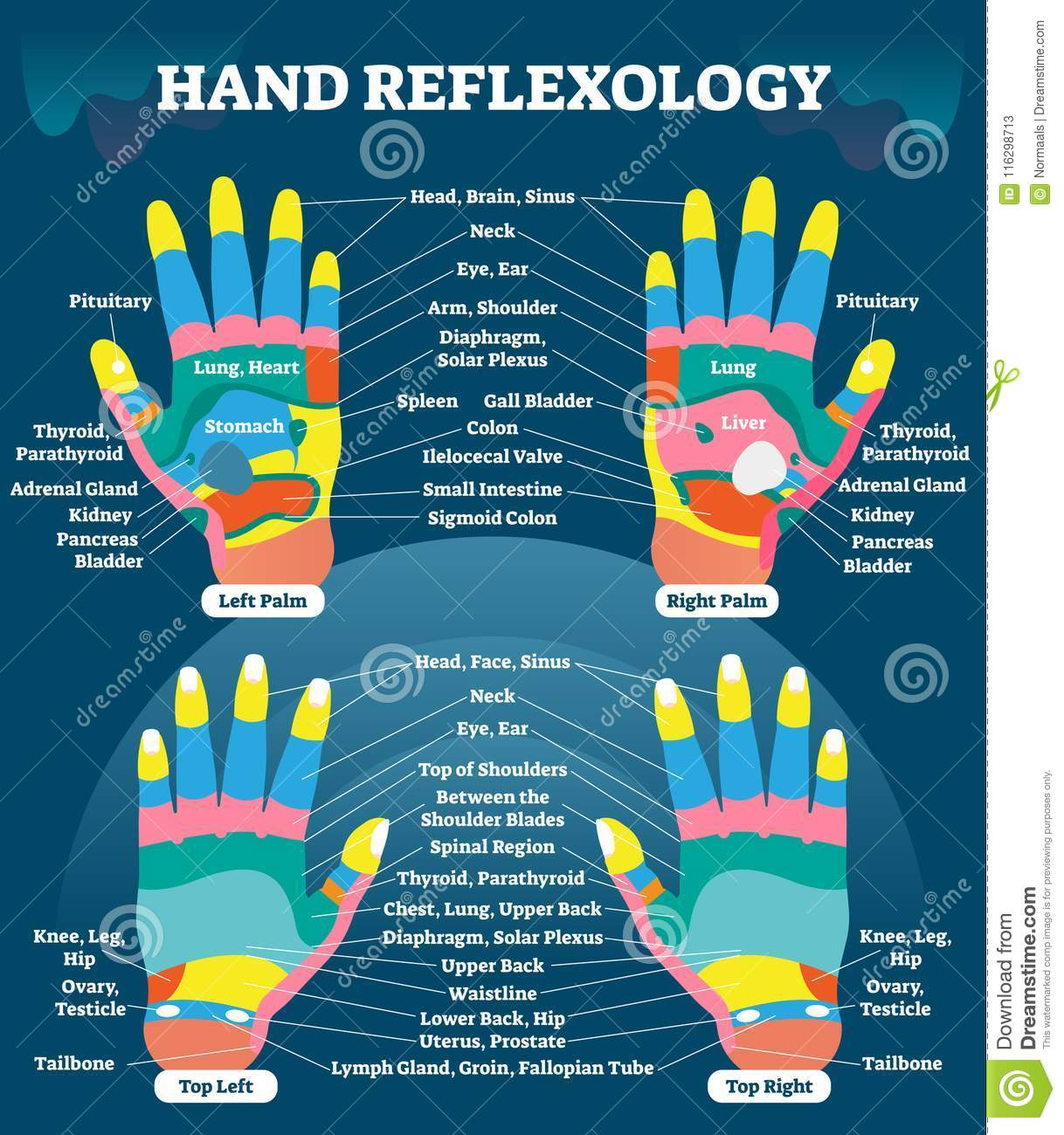 Hand Reflexology Massage Therapy Medical Vector