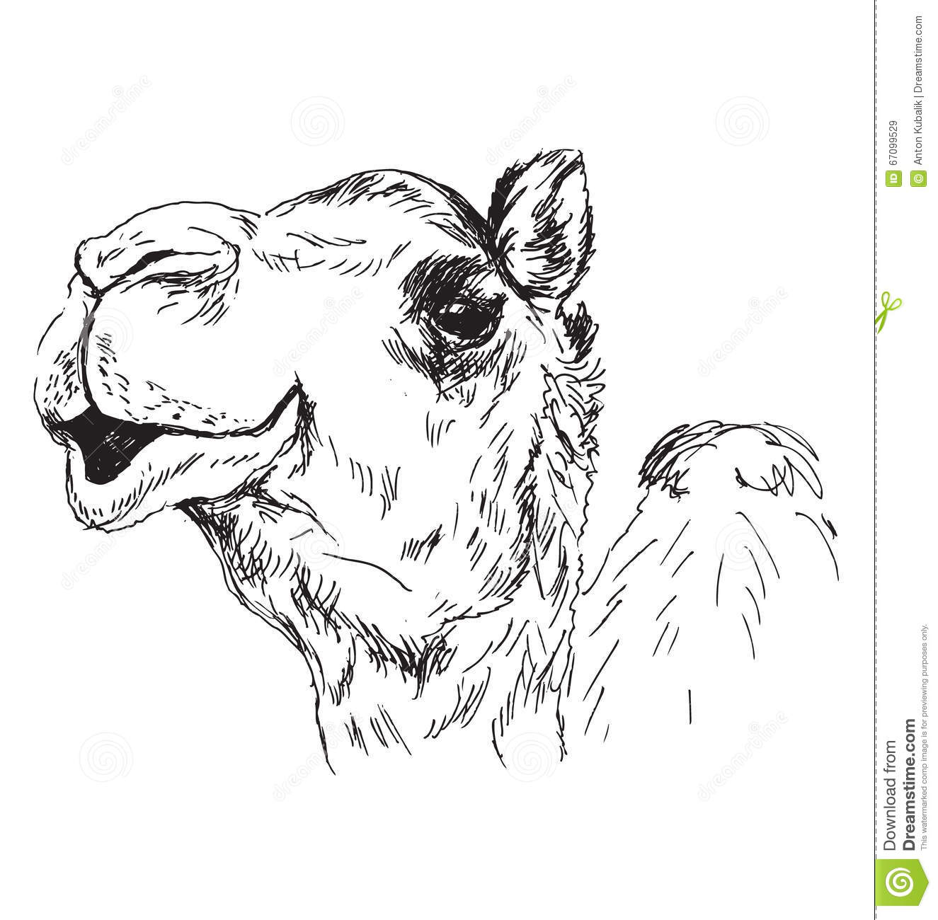 This is a photo of Dashing Camel Head Drawing