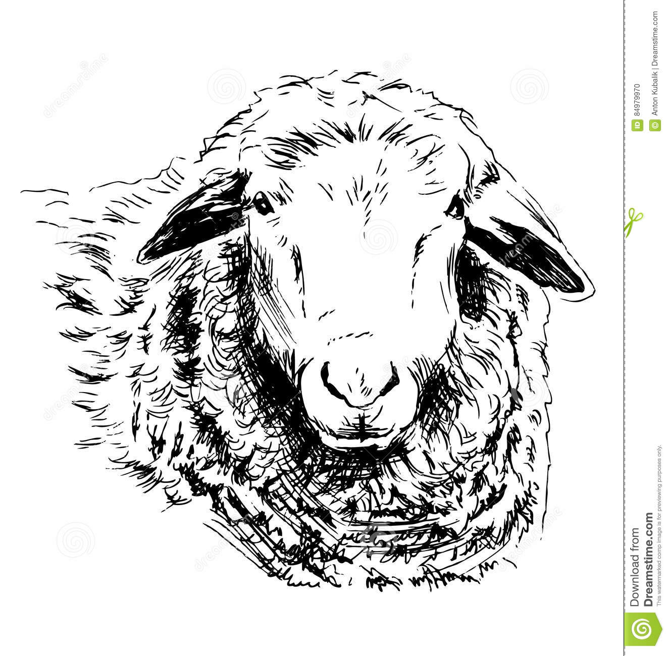 Line Drawing Of Sheep Face : Hand sketch head sheep stock vector illustration of farm