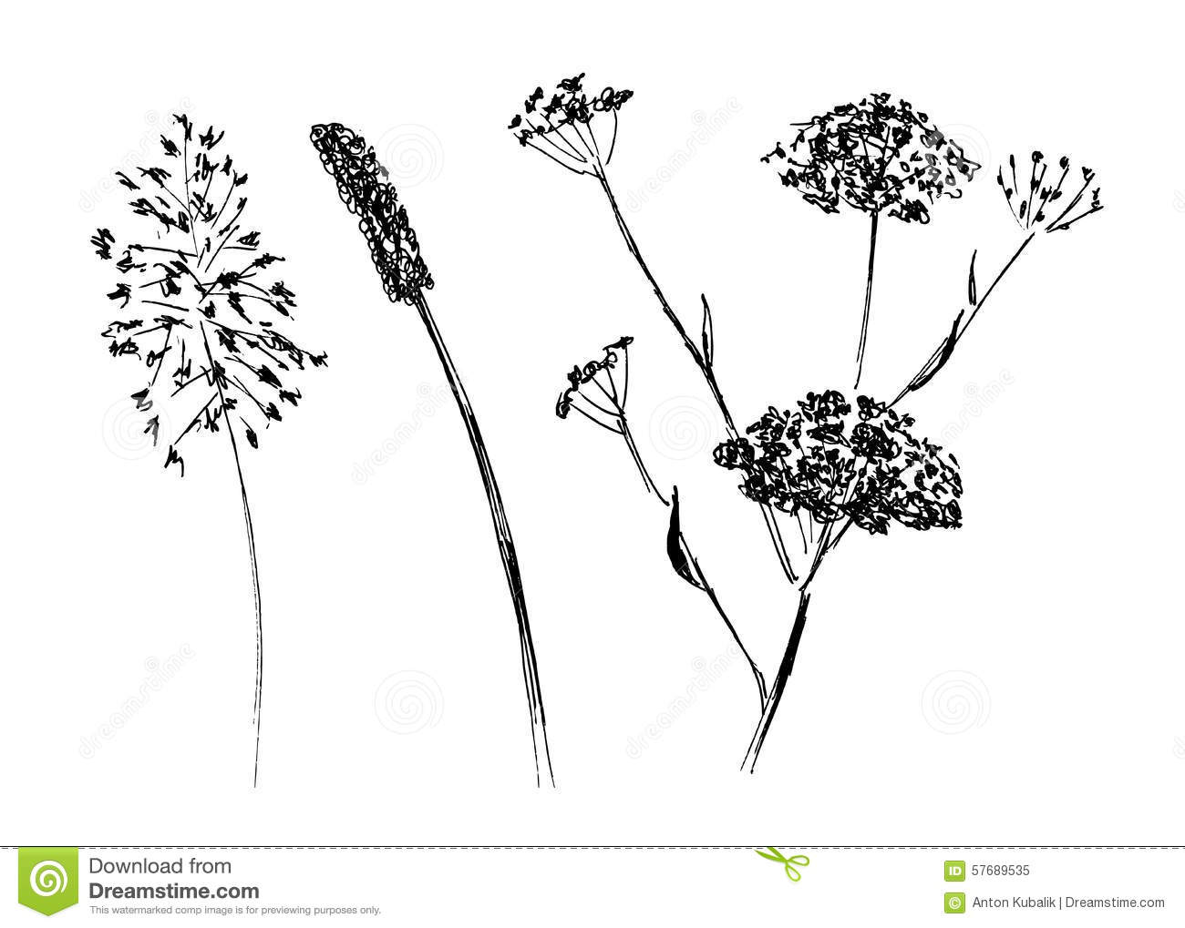 Dry Meadow Plants Stock Photo - Image: 48653196