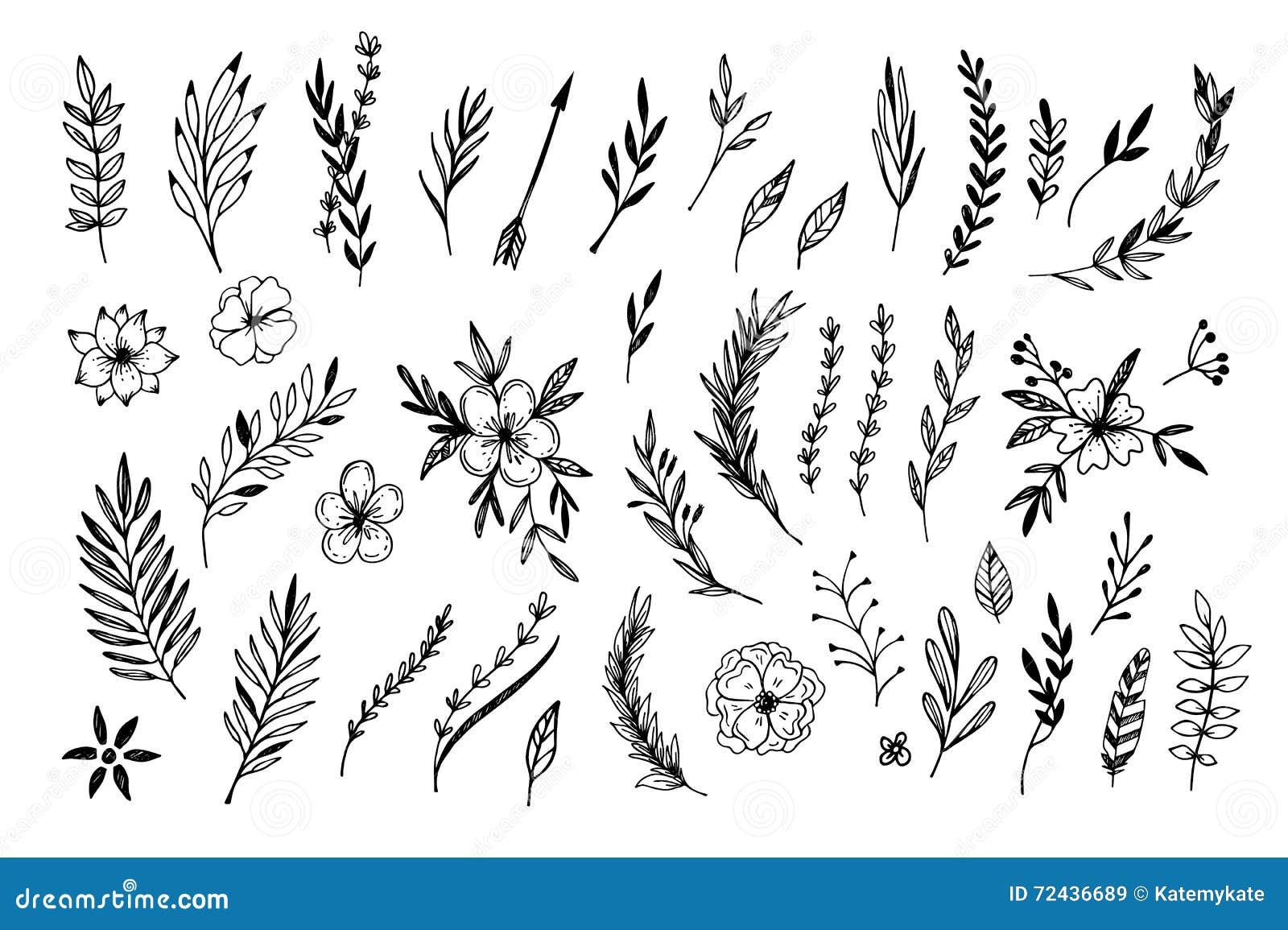 Flower Line Drawing Vintage : Vintage floral botanical flower drawings royalty free